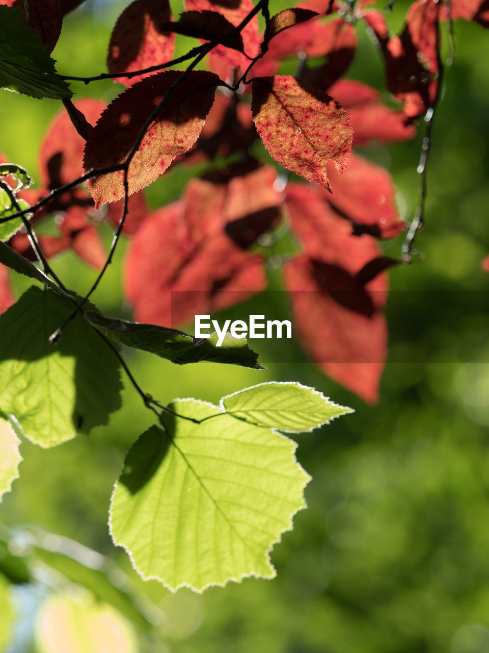 leaf, growth, nature, beauty in nature, plant, outdoors, day, fragility, no people, close-up, freshness, flower, branch