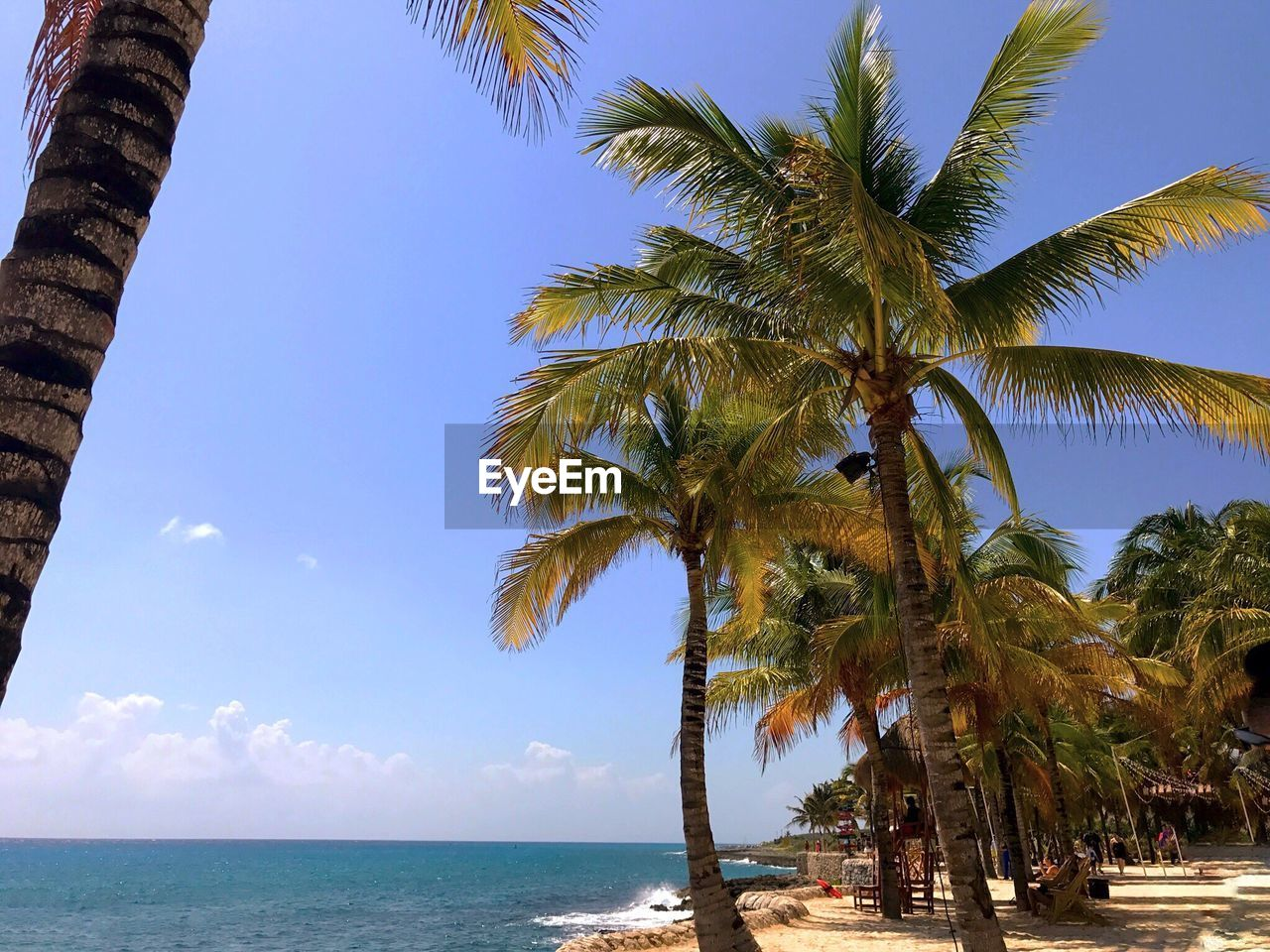 palm tree, tree, sea, scenics, nature, beauty in nature, tranquil scene, sky, beach, tranquility, horizon over water, day, tree trunk, water, outdoors, growth, no people, low angle view, clear sky