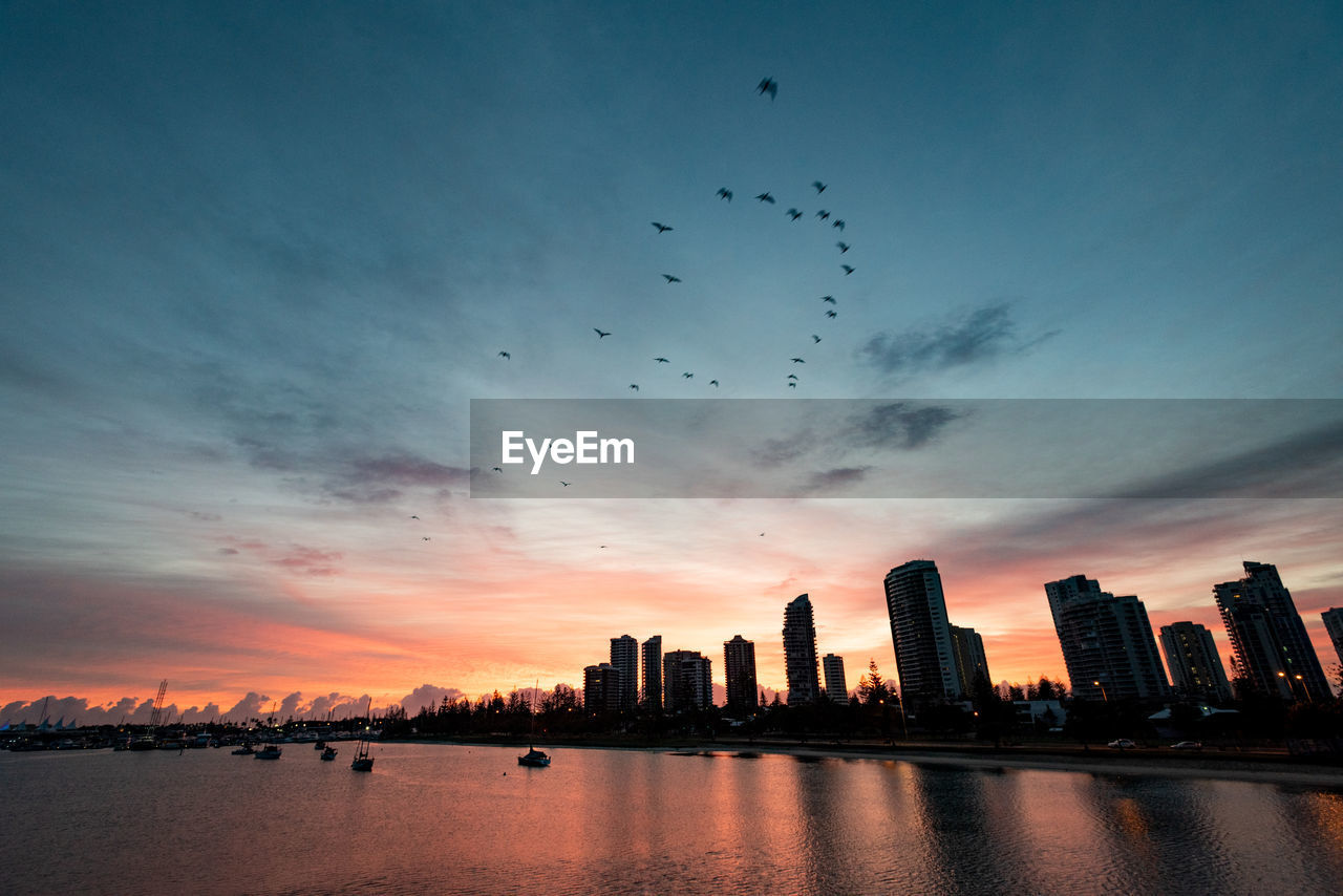 sky, architecture, building exterior, city, built structure, water, office building exterior, cloud - sky, sunset, skyscraper, animal themes, urban skyline, vertebrate, building, animal, bird, cityscape, flying, waterfront, tall - high, no people, outdoors, financial district