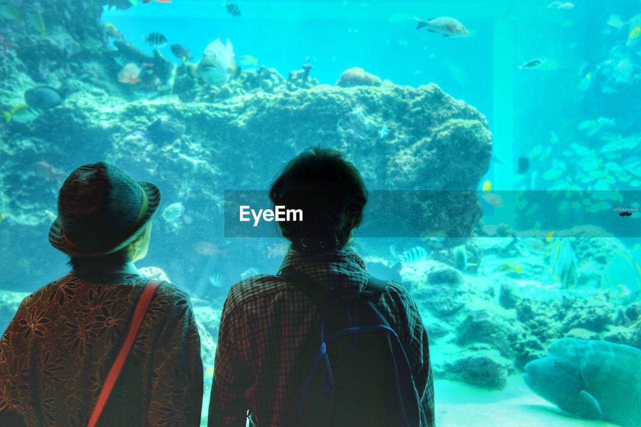 Rear View Of Men Standing In Aquarium