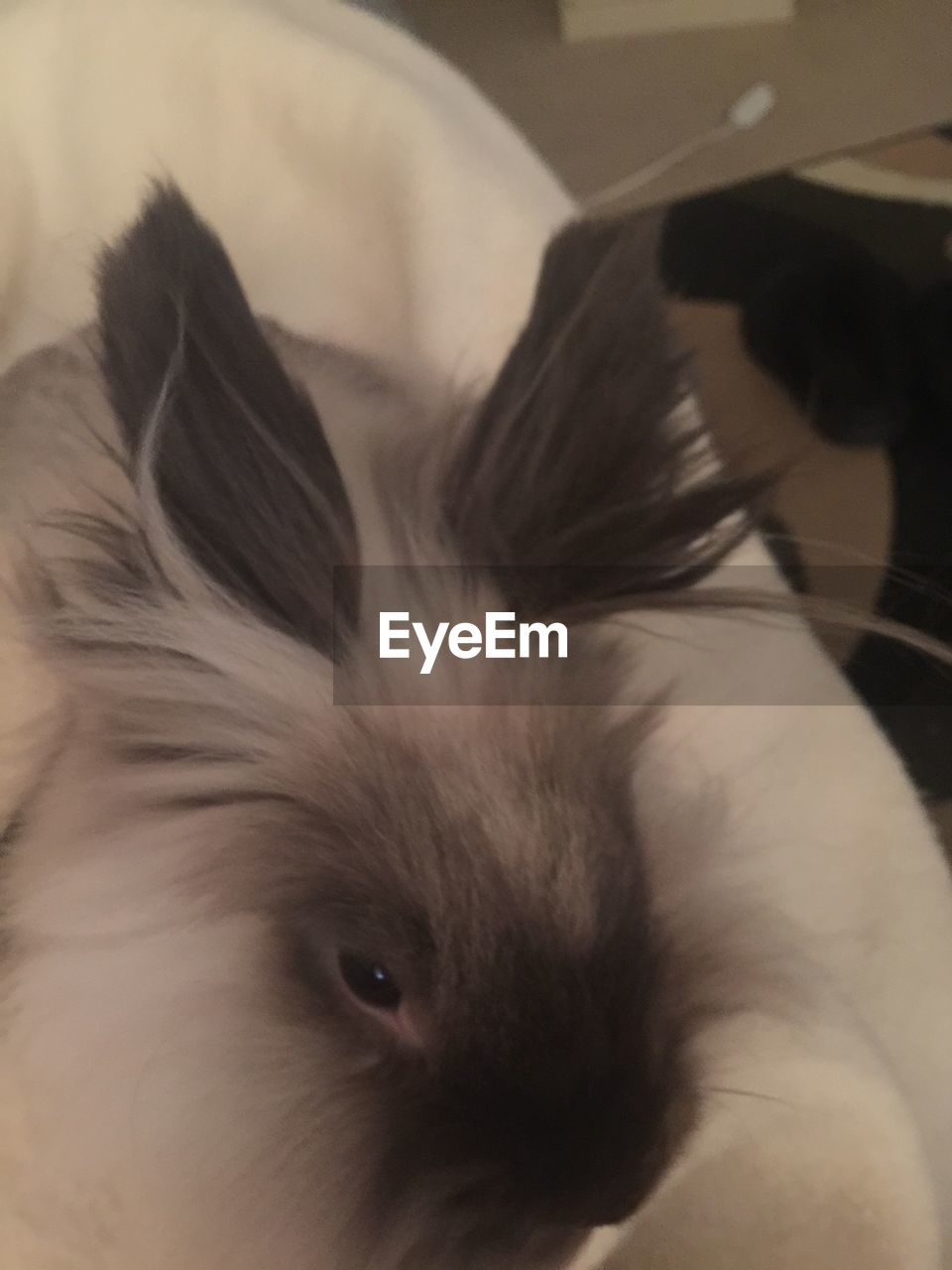 mammal, one animal, animal themes, animal, domestic, pets, domestic animals, vertebrate, close-up, indoors, animal body part, no people, animal hair, animal head, dog, canine, hair, home interior, relaxation, portrait, whisker, small