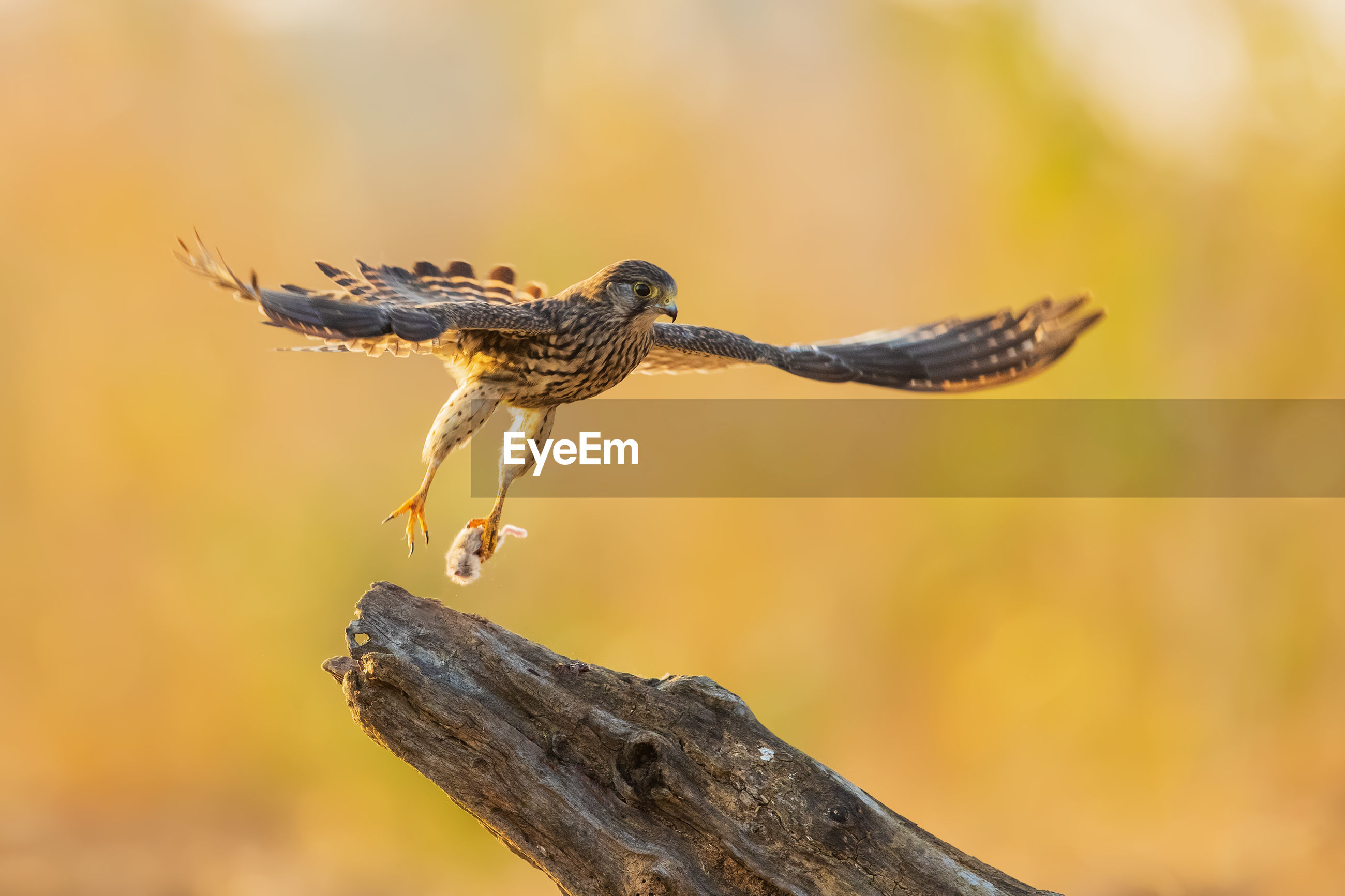 Close-up of bird landing on branch