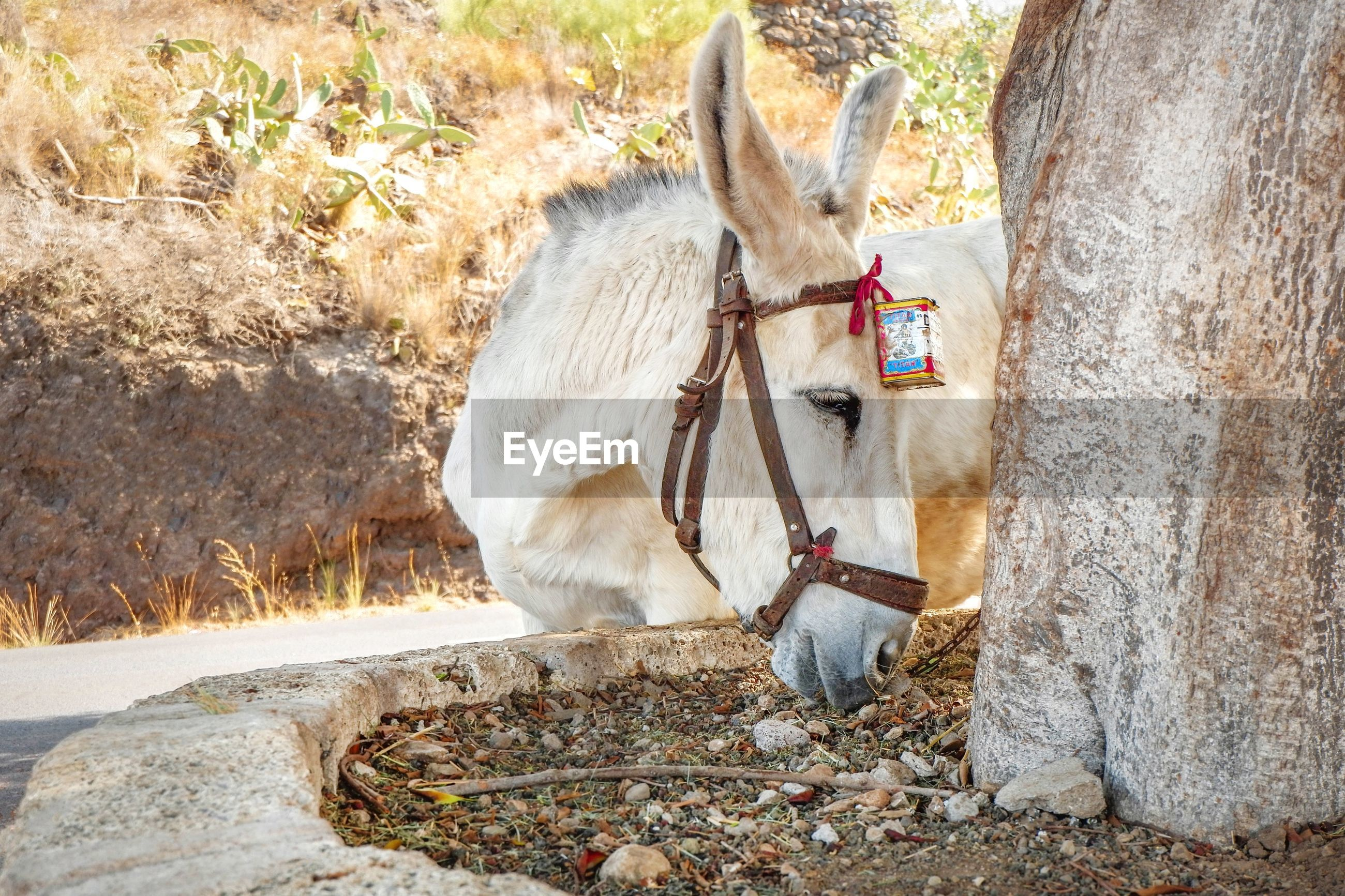 Donkey standing next to a tree