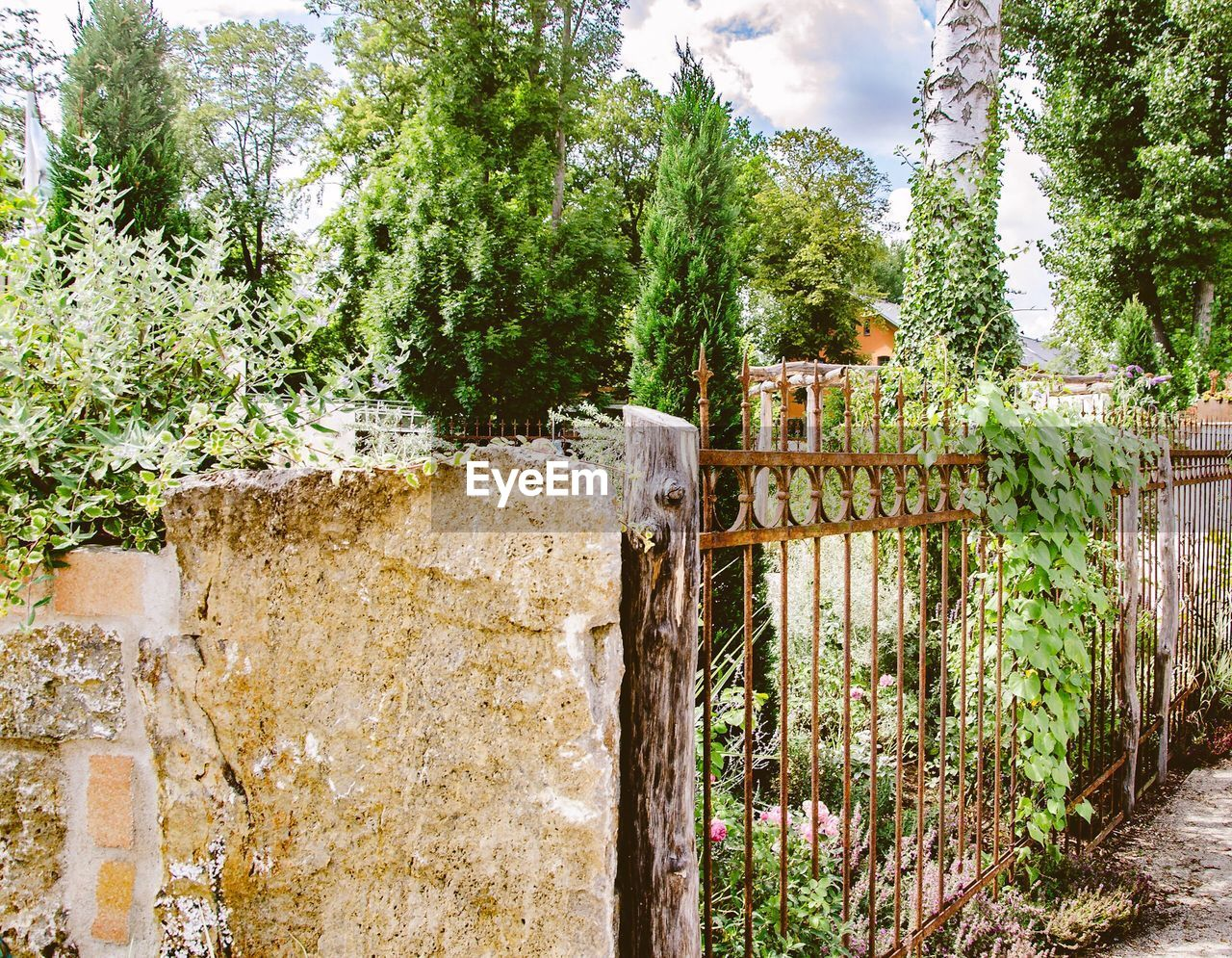 plant, tree, built structure, architecture, day, nature, no people, growth, green color, fence, barrier, boundary, wall, cloud - sky, sky, old, weathered, outdoors, building exterior, wall - building feature, stone wall, ruined