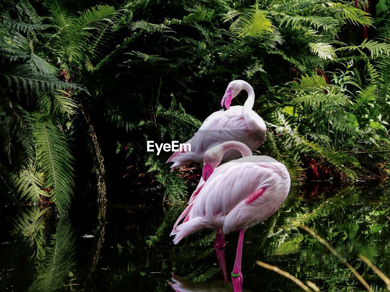 VIEW OF A BIRD
