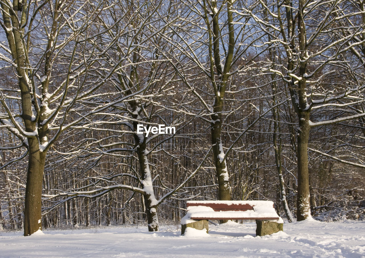 snow, winter, cold temperature, weather, bare tree, tree, nature, no people, frozen, outdoors, scenics, tranquility, day, branch, beauty in nature, snowing, sky