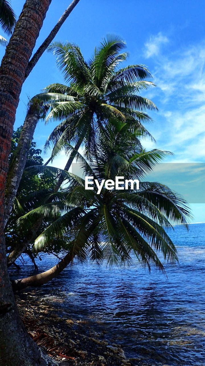 tree, sky, palm tree, tropical climate, water, plant, nature, growth, beauty in nature, sea, tranquility, scenics - nature, day, tranquil scene, land, no people, beach, horizon, horizon over water, outdoors, coconut palm tree, palm leaf, tropical tree