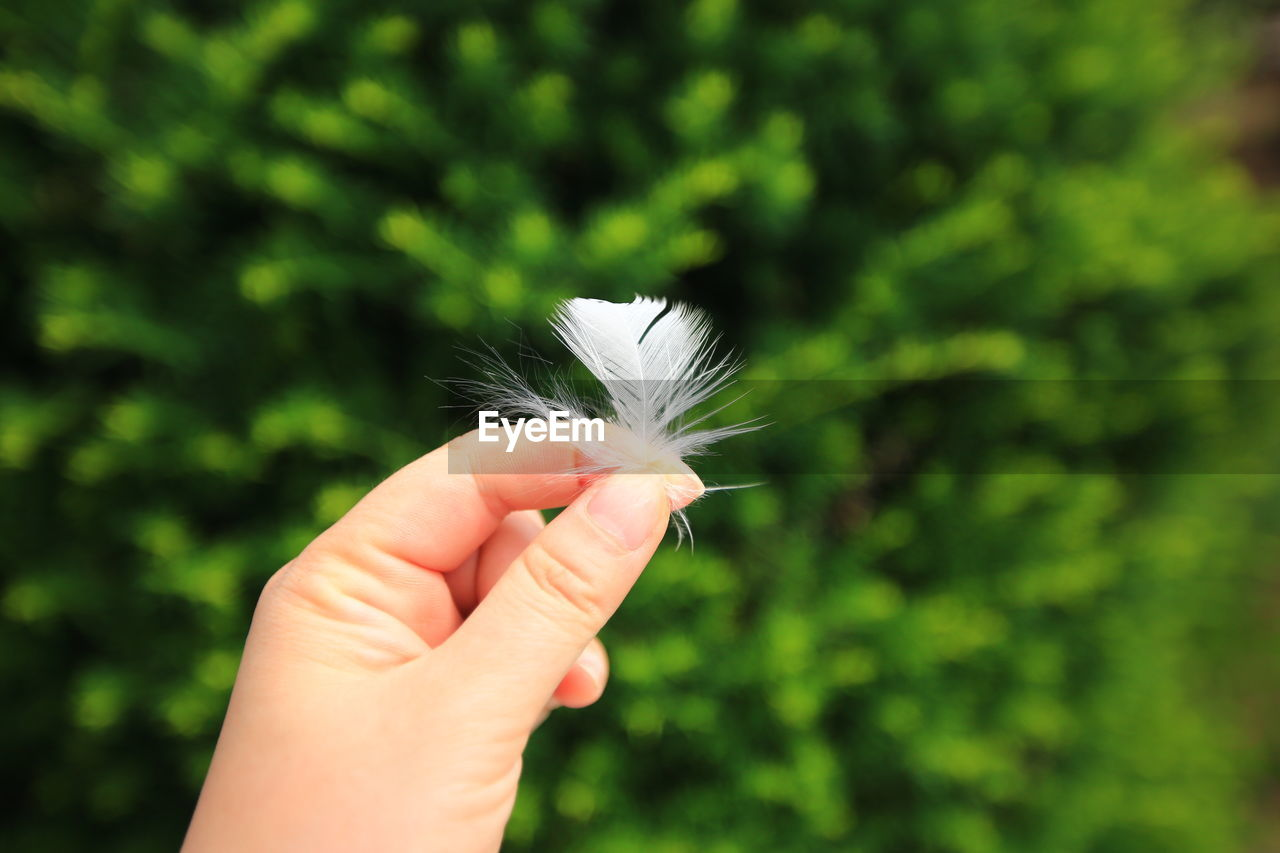 Close-up of hand holding feather against plants