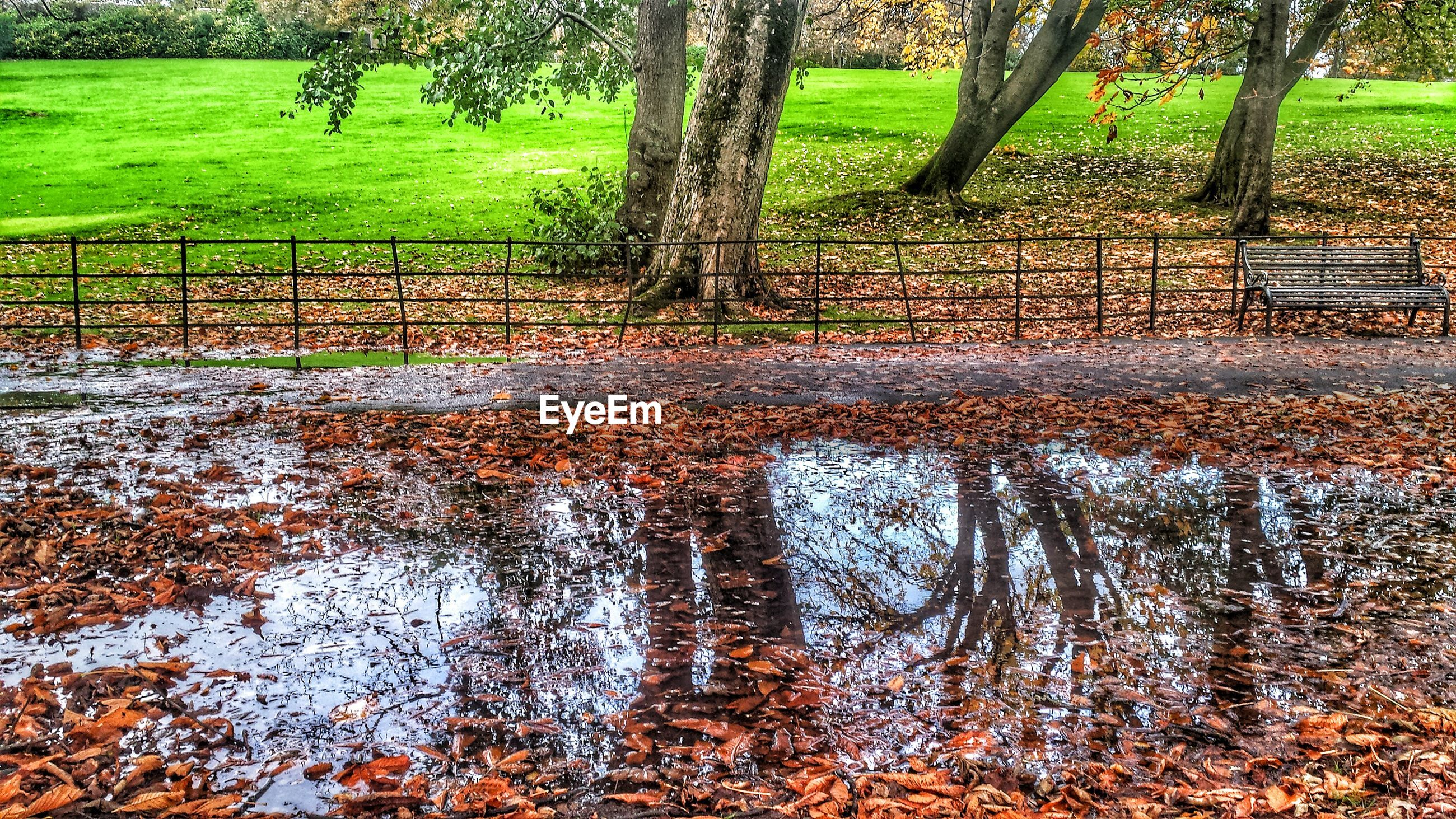 Puddle and falling leaves on road in park