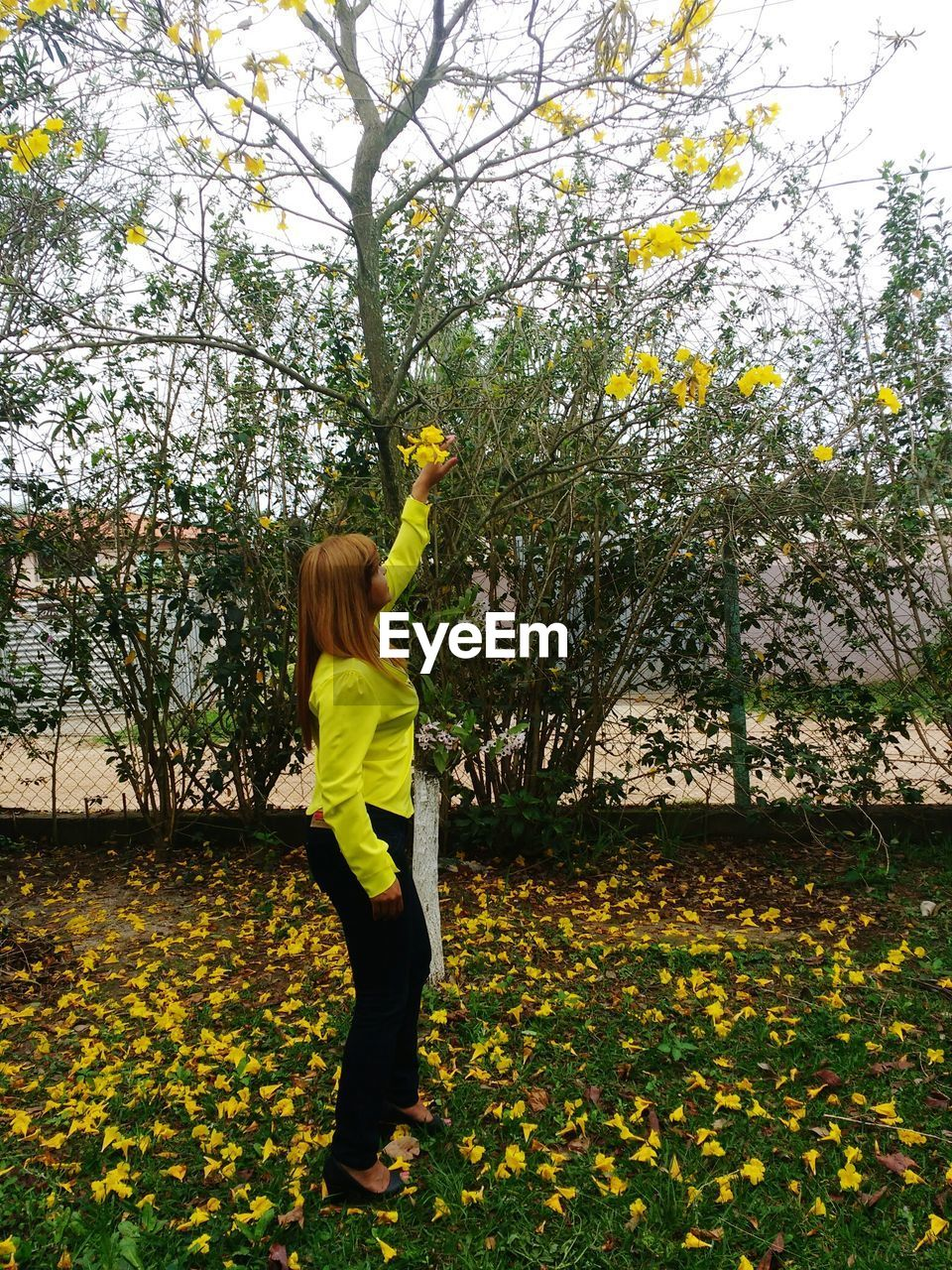 Full length of woman touching yellow flower on tree