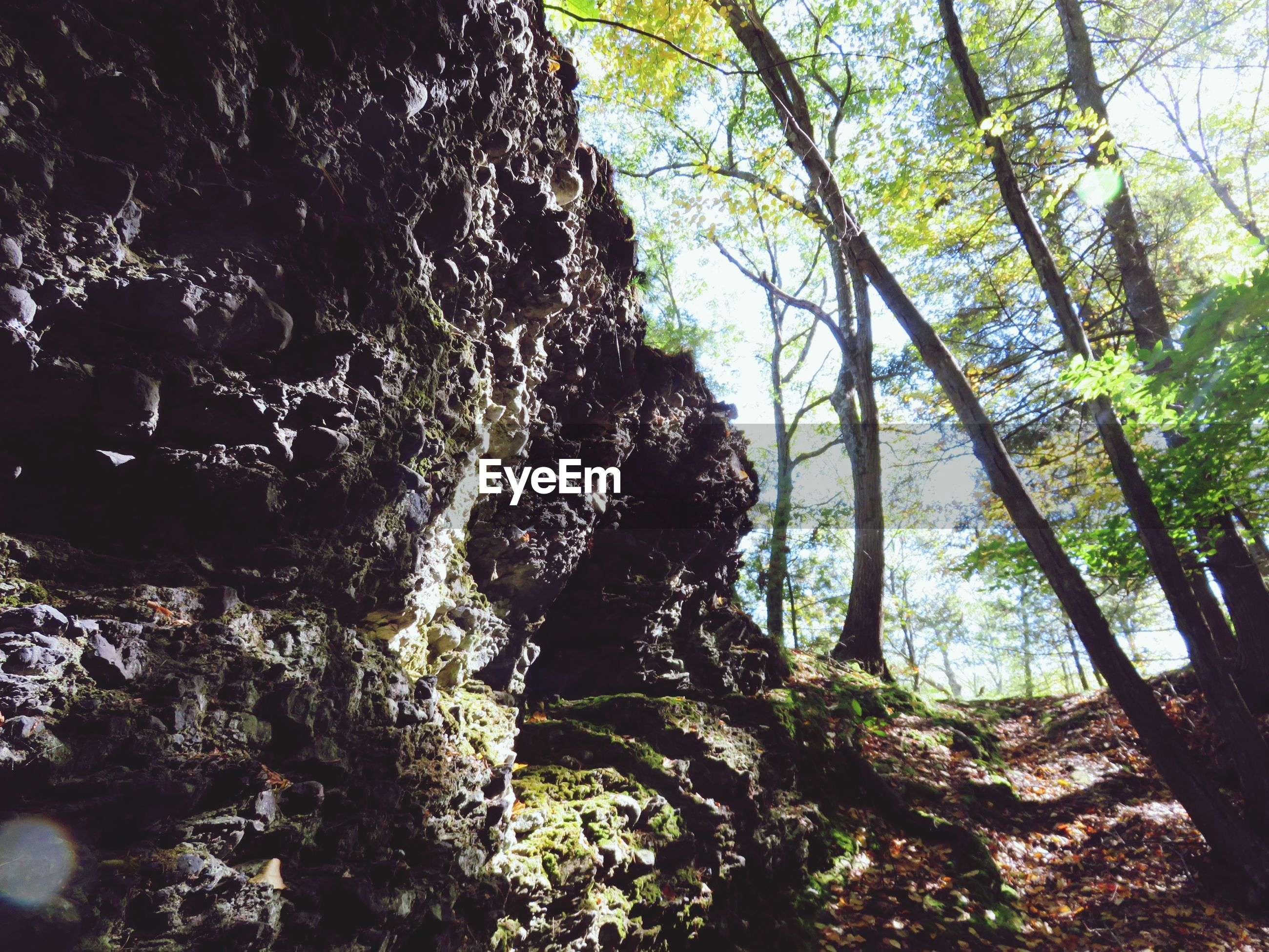 Low angle view of rocks and trees in forest