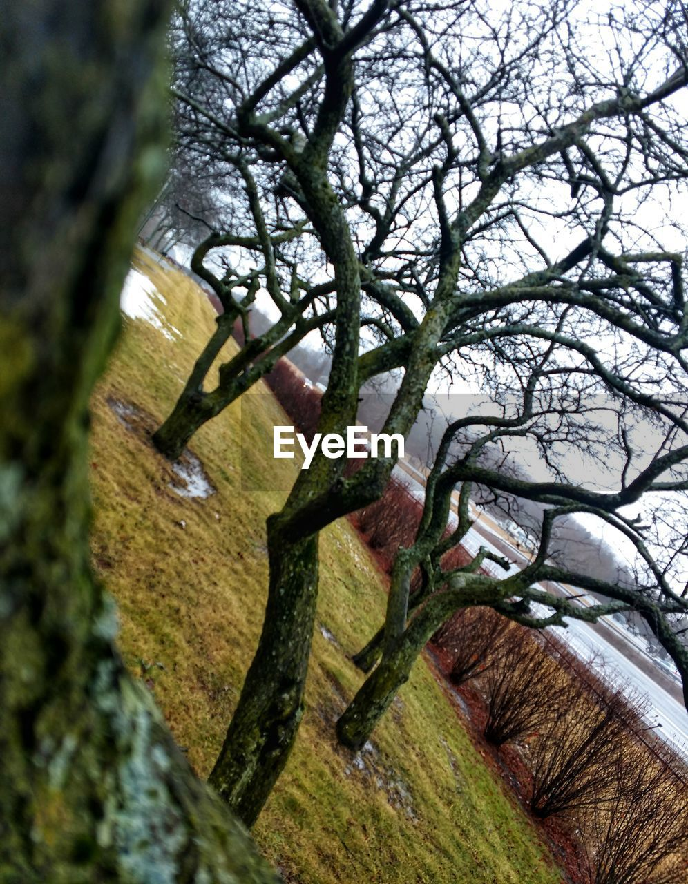 tree, no people, day, branch, bare tree, tree trunk, outdoors, nature, close-up, beauty in nature, sky