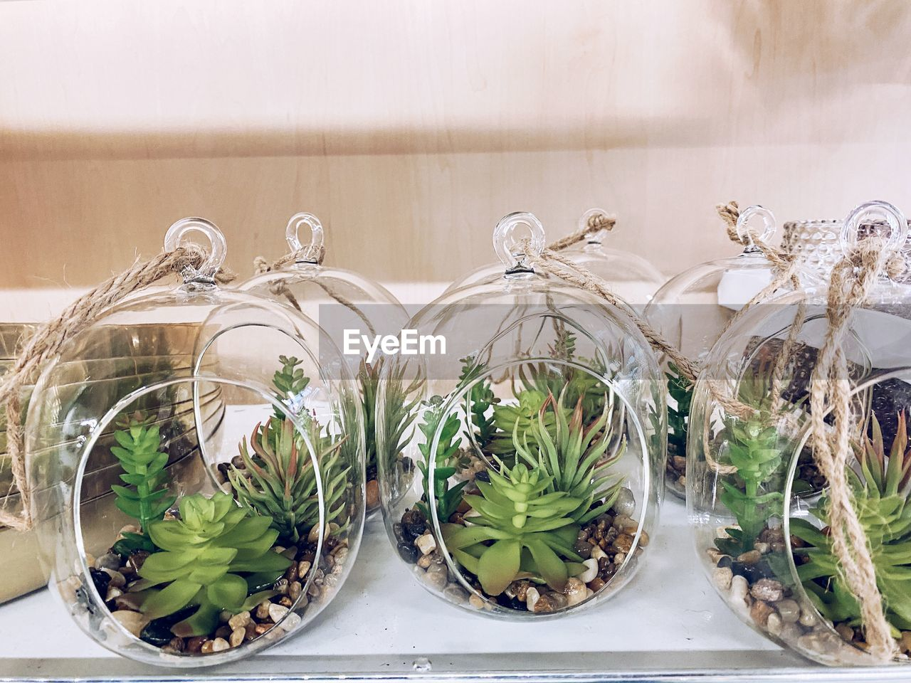 CLOSE-UP OF PLANTS IN GLASS CONTAINER