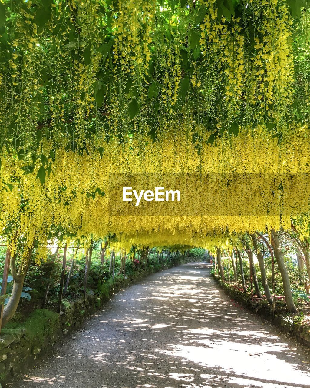 growth, nature, tree, beauty in nature, tranquility, yellow, tranquil scene, outdoors, the way forward, plant, day, no people, green color, scenics, flower, freshness