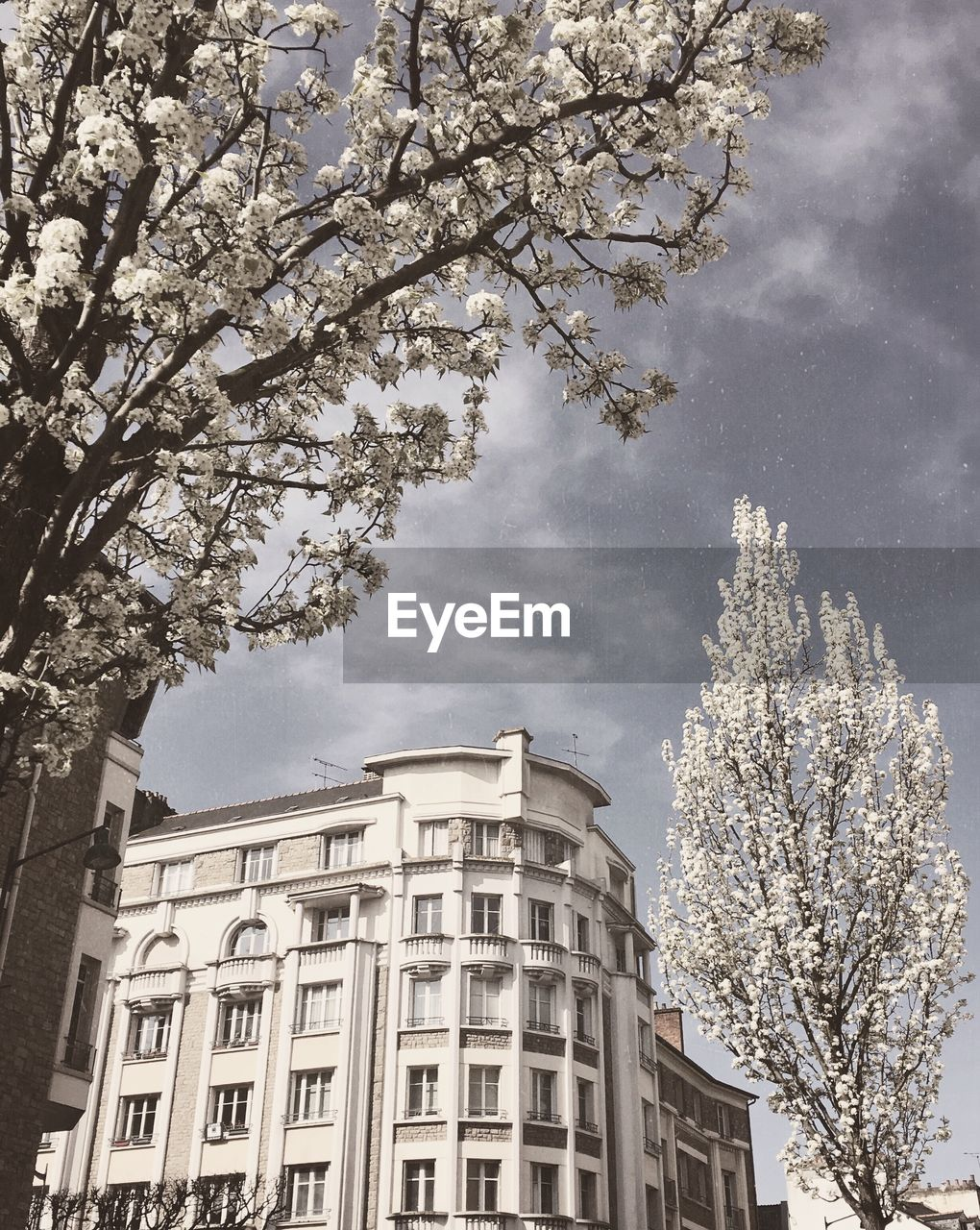tree, building exterior, plant, architecture, built structure, sky, nature, low angle view, growth, day, flower, springtime, branch, blossom, flowering plant, no people, cherry blossom, fragility, freshness, outdoors, cherry tree