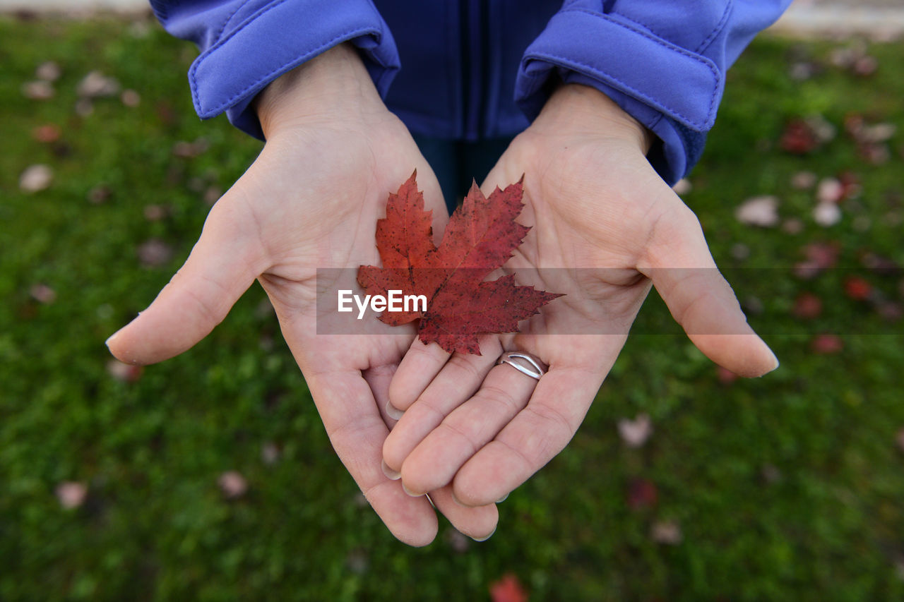 Cropped Hands Holding Maple Leaf On Field During Autumn