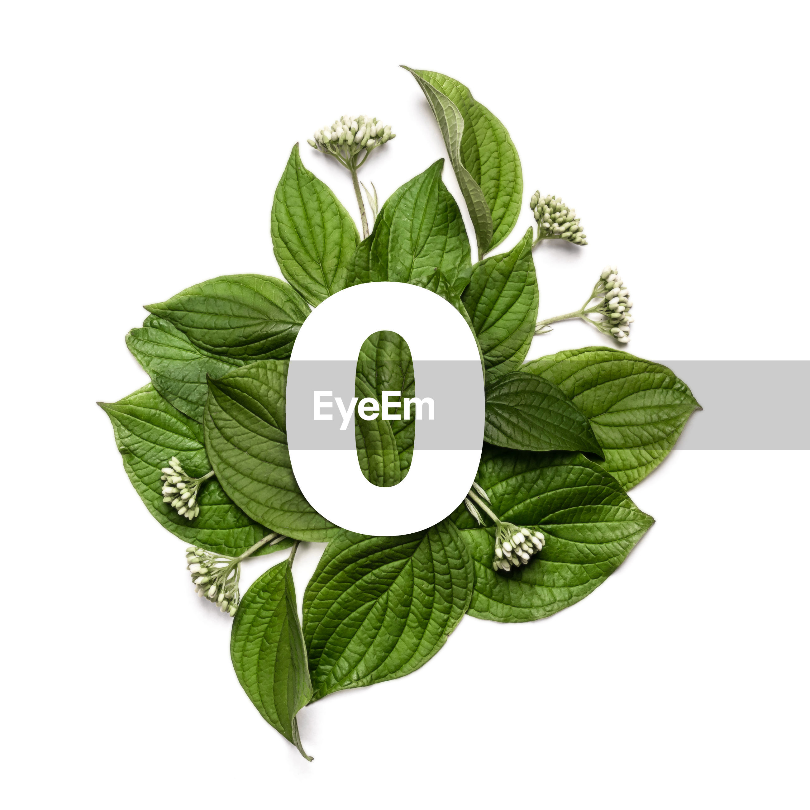 HIGH ANGLE VIEW OF FRESH GREEN LEAVES WITH WHITE BACKGROUND
