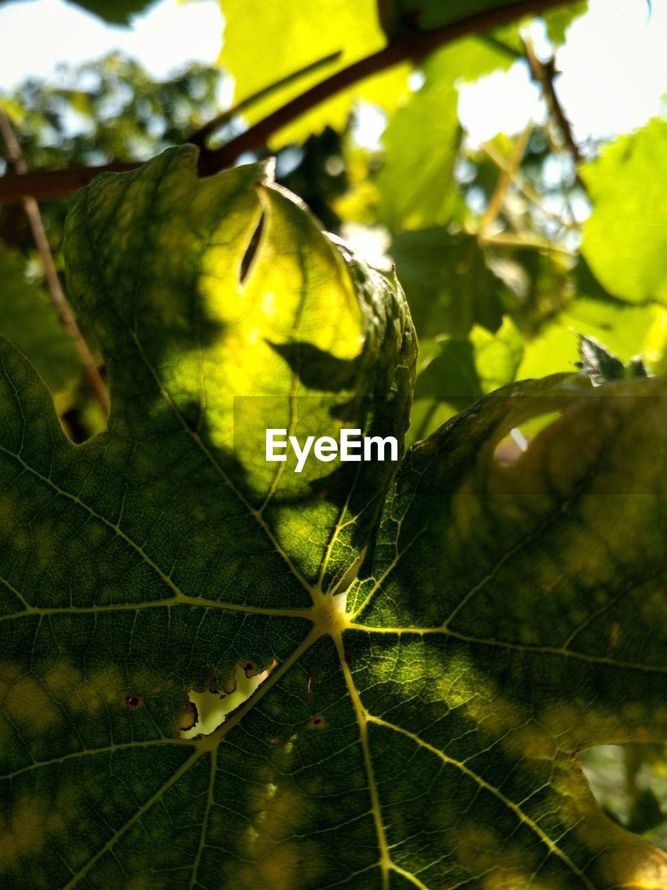 leaf, green color, growth, close-up, nature, day, no people, beauty in nature, outdoors, fruit, freshness