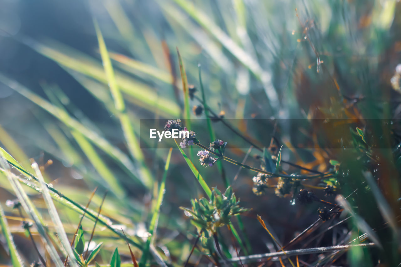 animals in the wild, animal themes, animal wildlife, invertebrate, animal, plant, insect, one animal, nature, growth, no people, day, close-up, selective focus, focus on foreground, beauty in nature, green color, outdoors, plant part, blade of grass