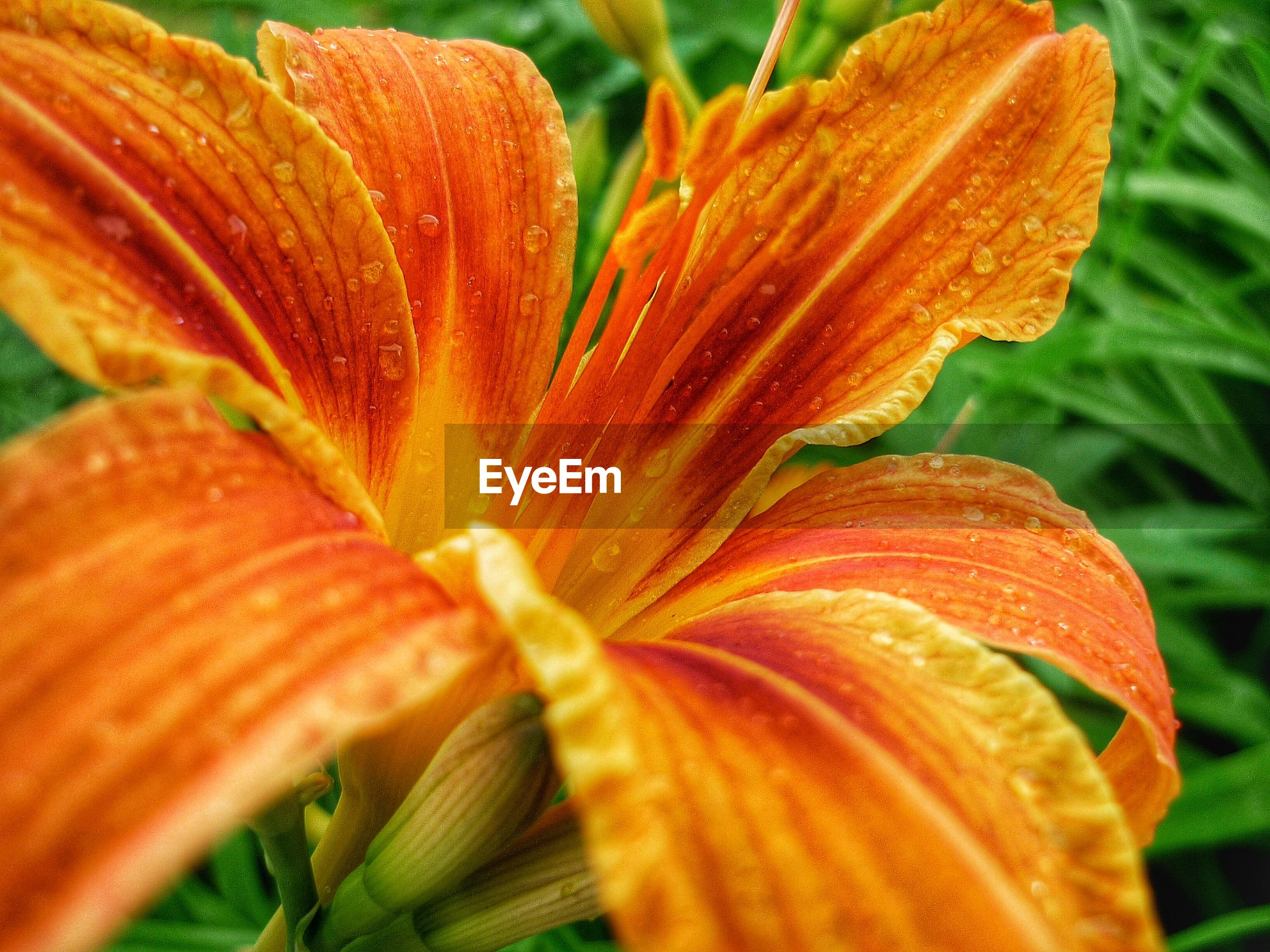 freshness, flower, growth, fragility, close-up, flower head, petal, beauty in nature, nature, focus on foreground, stamen, orange color, plant, season, blooming, botany, in bloom, macro, pollen, selective focus, blossom, natural pattern, outdoors, day, no people, softness, extreme close-up