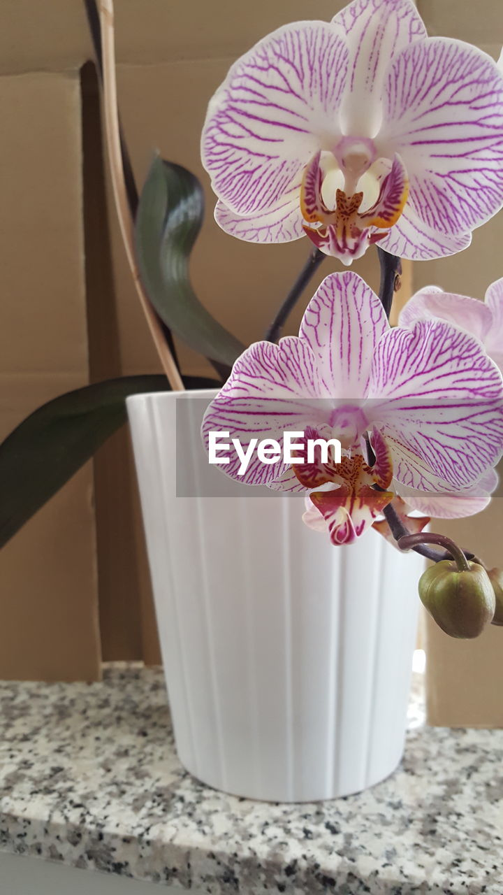 indoors, home interior, table, flower, no people, vase, close-up, flower head, day, freshness, fragility