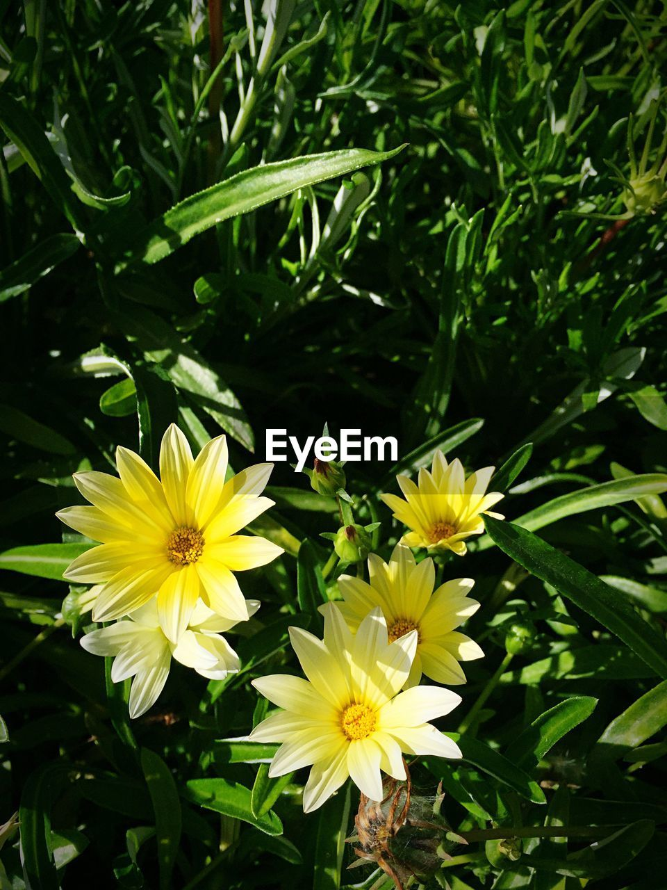 flower, yellow, petal, nature, beauty in nature, freshness, fragility, growth, flower head, plant, blooming, outdoors, no people, close-up, day