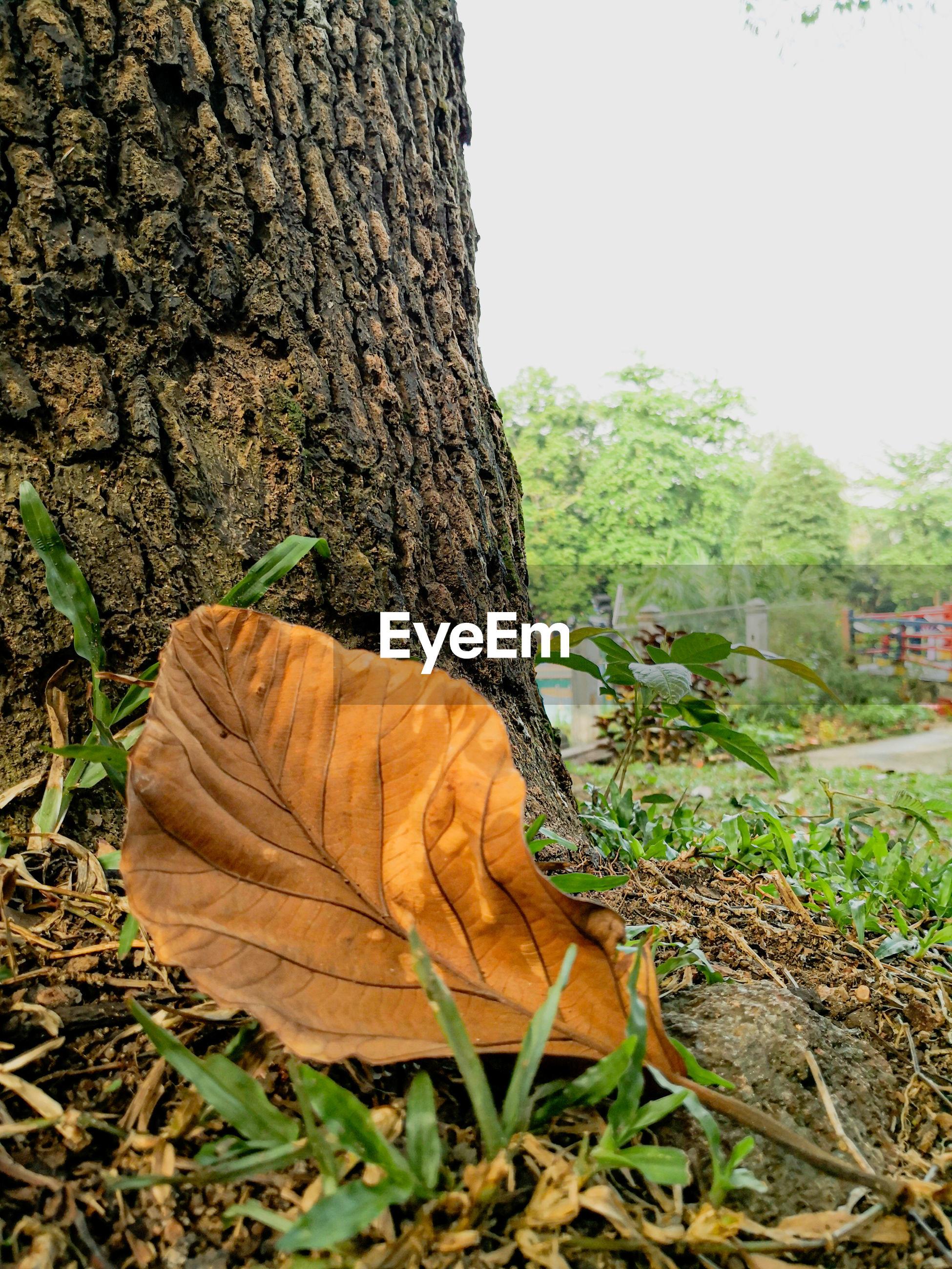 CLOSE-UP OF FALLEN TREE ON FIELD