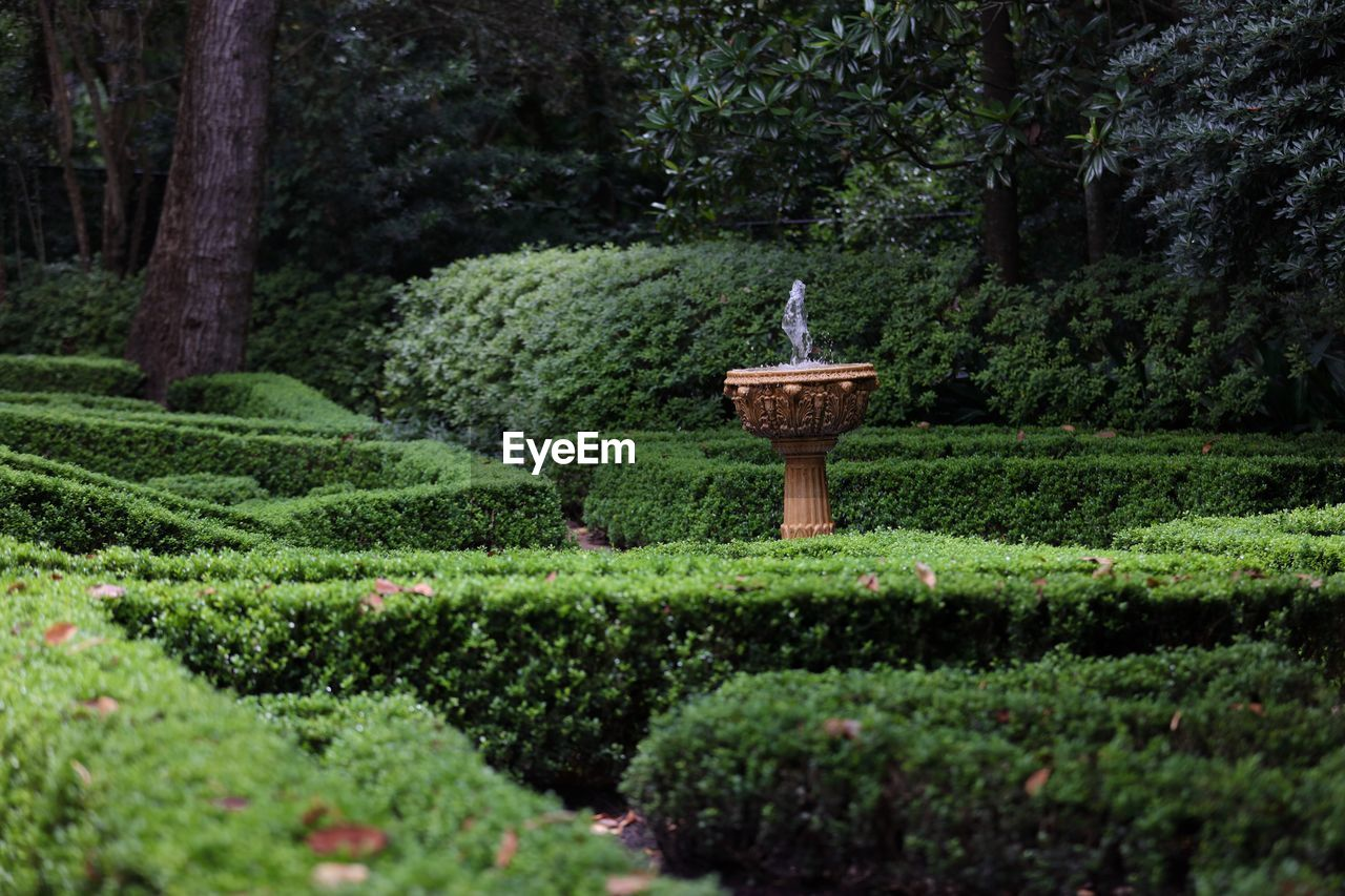 Hedges And Fountain In Garden