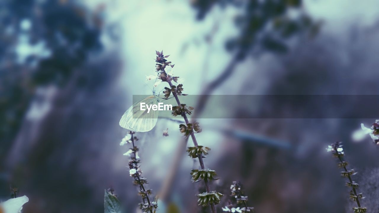 plant, flower, growth, flowering plant, beauty in nature, fragility, vulnerability, freshness, close-up, focus on foreground, nature, selective focus, no people, day, tree, flower head, springtime, petal, botany, blossom, outdoors, spring
