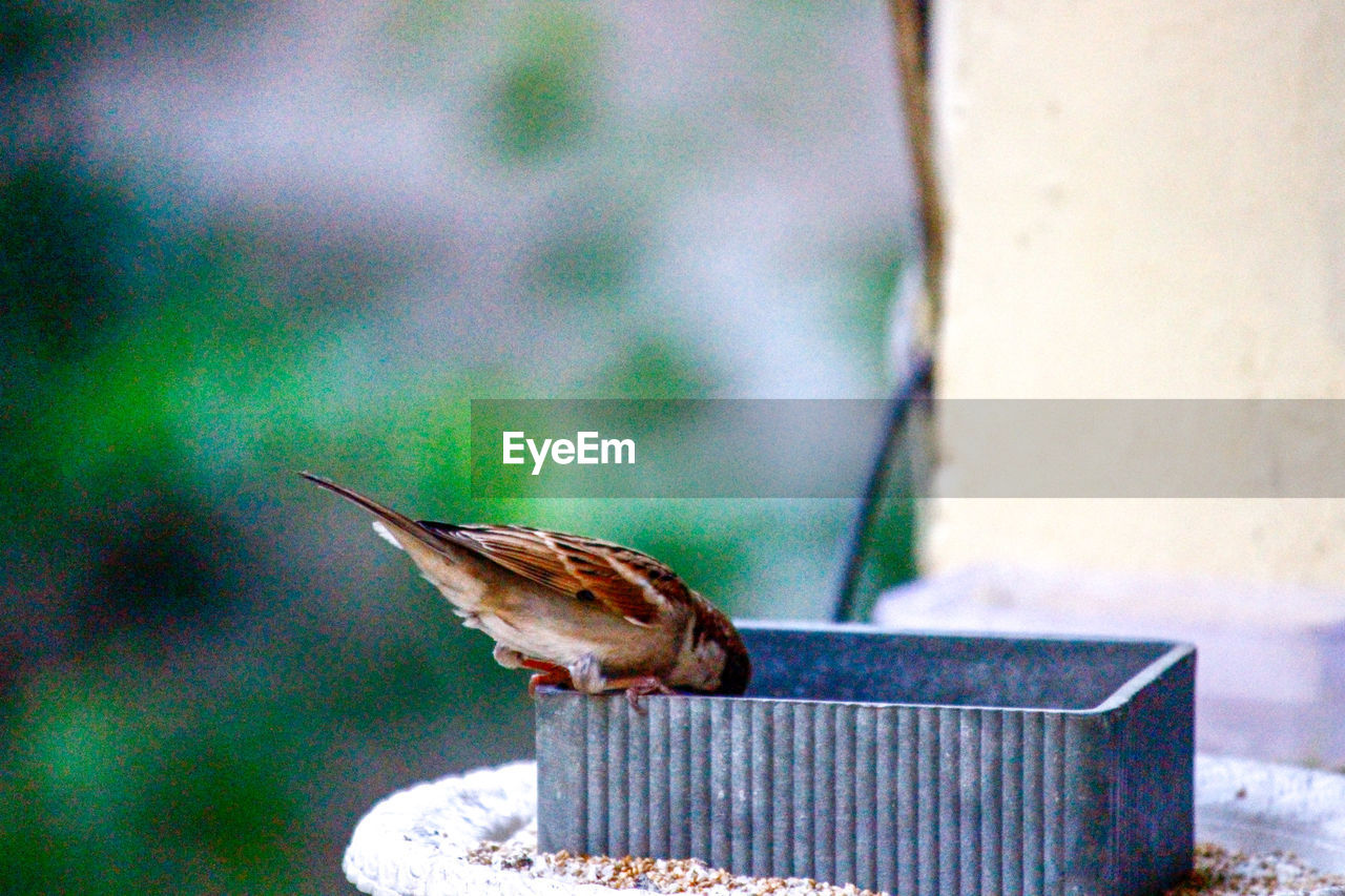 animal themes, animal, one animal, bird, animal wildlife, vertebrate, animals in the wild, focus on foreground, perching, day, no people, sparrow, side view, close-up, nature, wood - material, selective focus, outdoors, metal, full length
