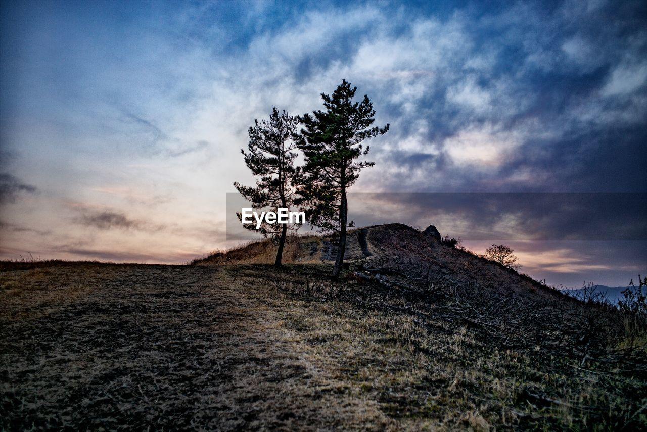 cloud - sky, sky, tree, plant, scenics - nature, tranquil scene, beauty in nature, nature, landscape, tranquility, land, environment, non-urban scene, field, no people, outdoors, sunset, hill, idyllic, growth