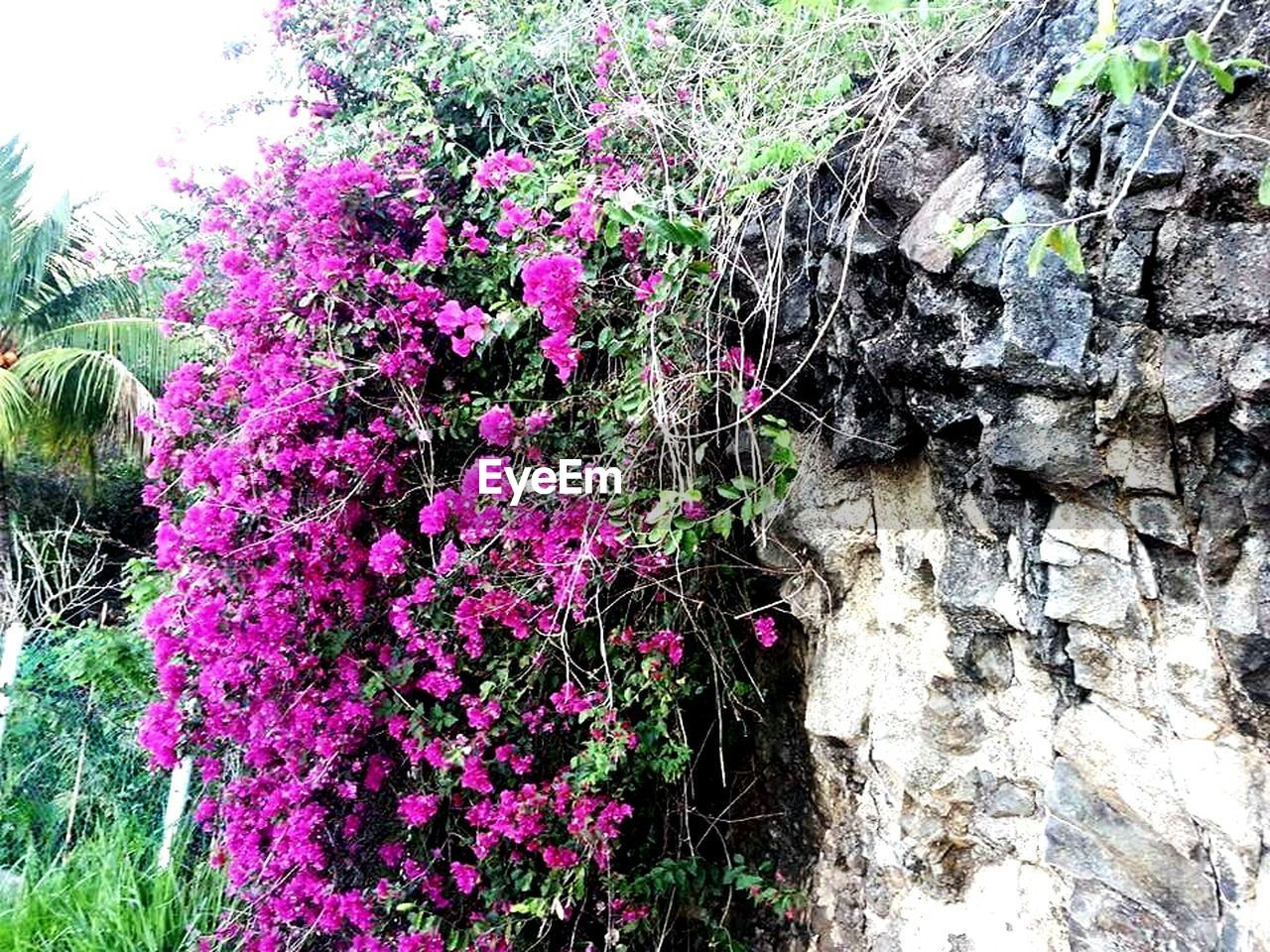 growth, flower, plant, nature, outdoors, day, no people, fragility, beauty in nature, tree, freshness, close-up
