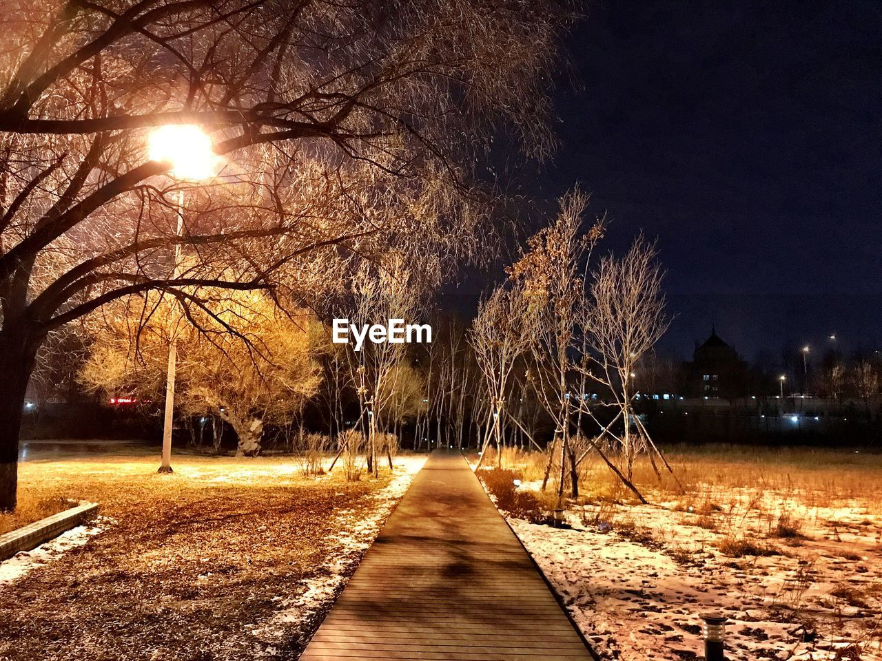 night, tree, illuminated, bare tree, outdoors, the way forward, street light, nature, winter, cold temperature, no people, beauty in nature, branch, snow, scenics, sky
