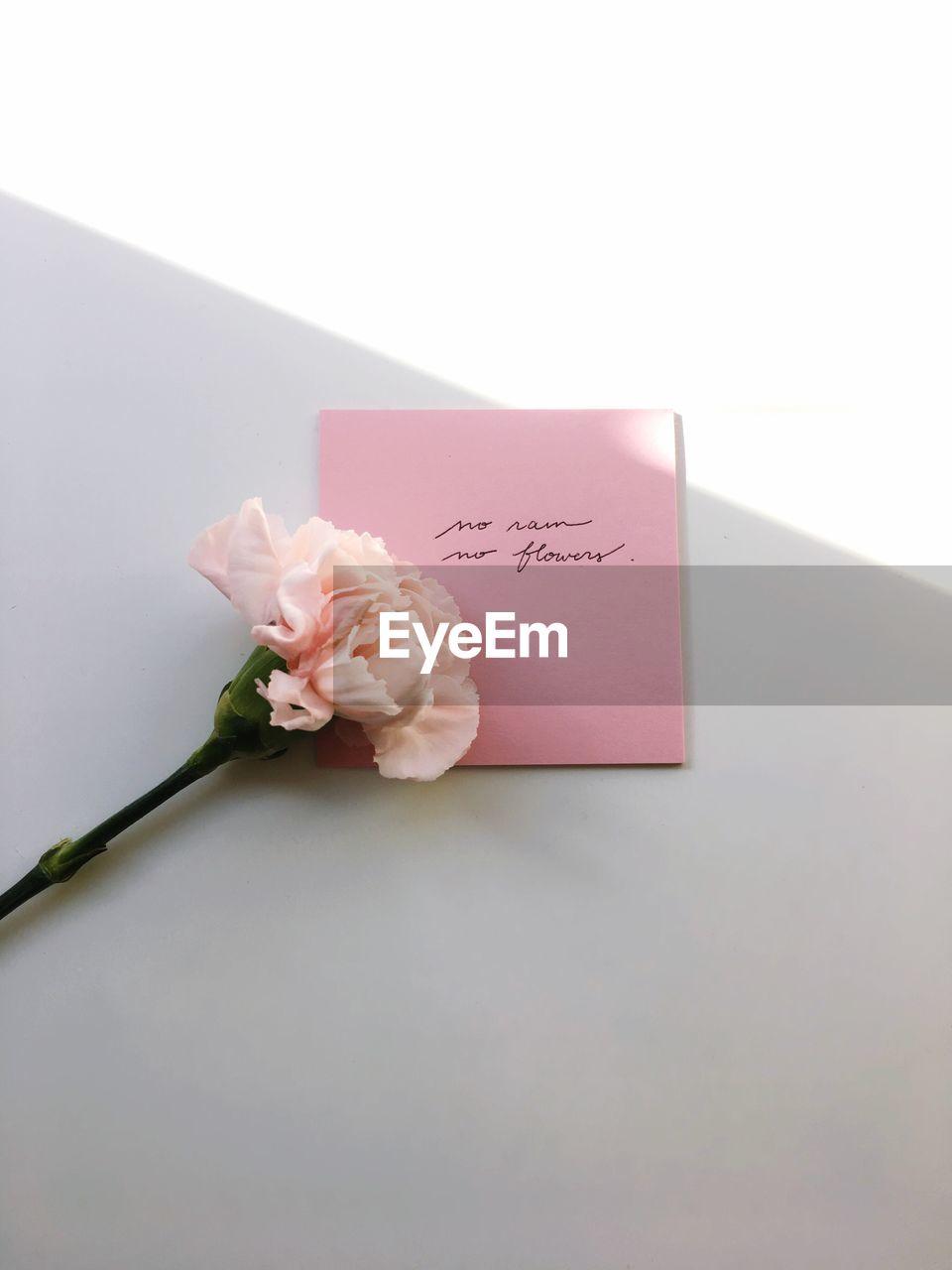 CLOSE-UP OF PINK ROSE FLOWER