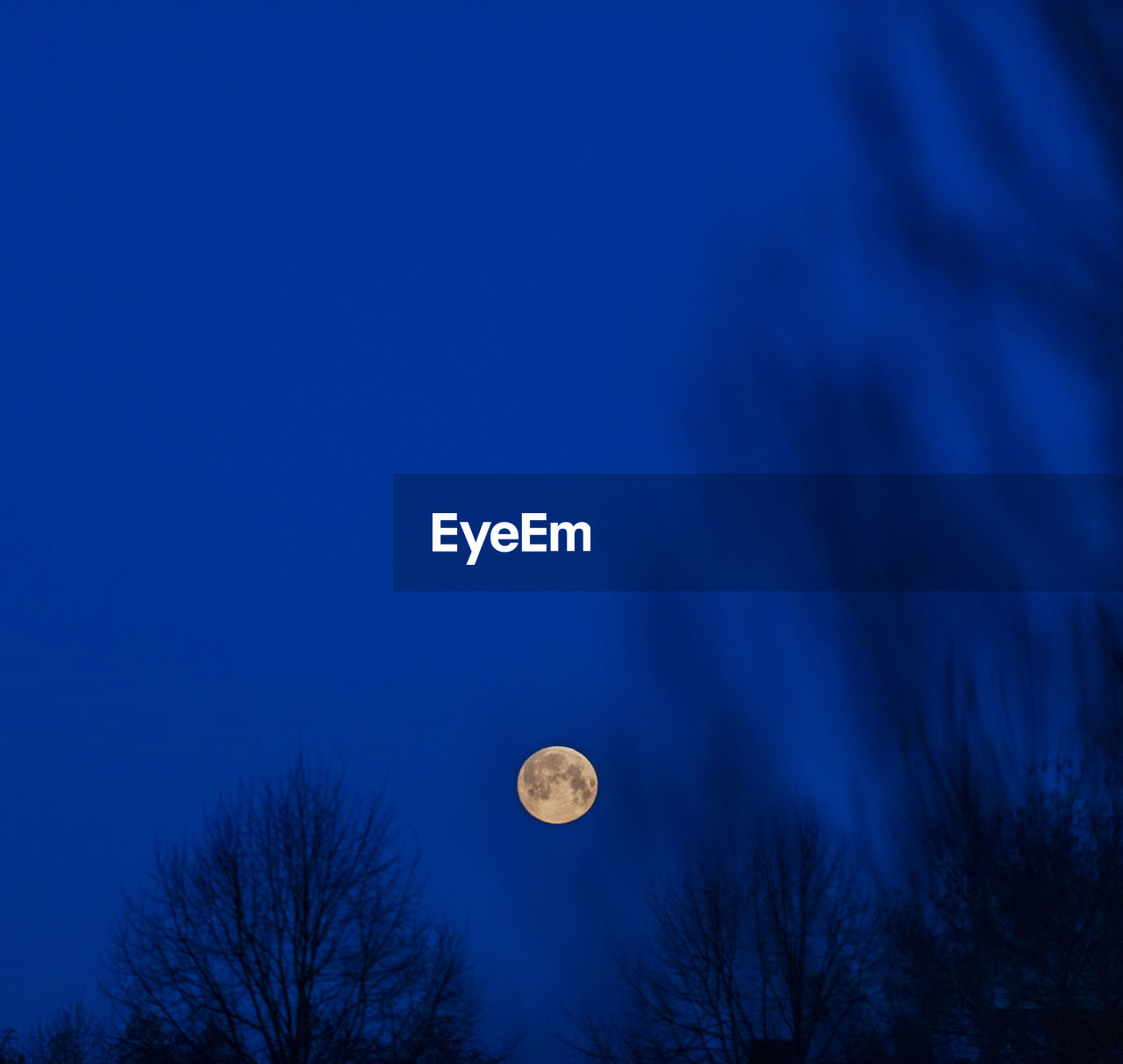 sky, moon, tree, blue, plant, low angle view, space, beauty in nature, no people, tranquility, nature, night, bare tree, astronomy, tranquil scene, scenics - nature, full moon, dusk, planetary moon, outdoors, moonlight