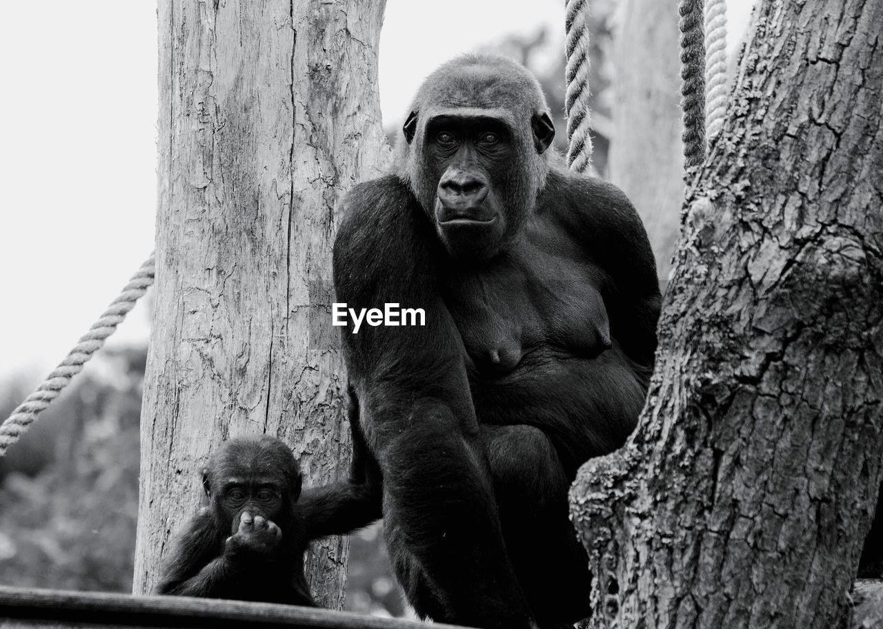 Close-up of ape on tree