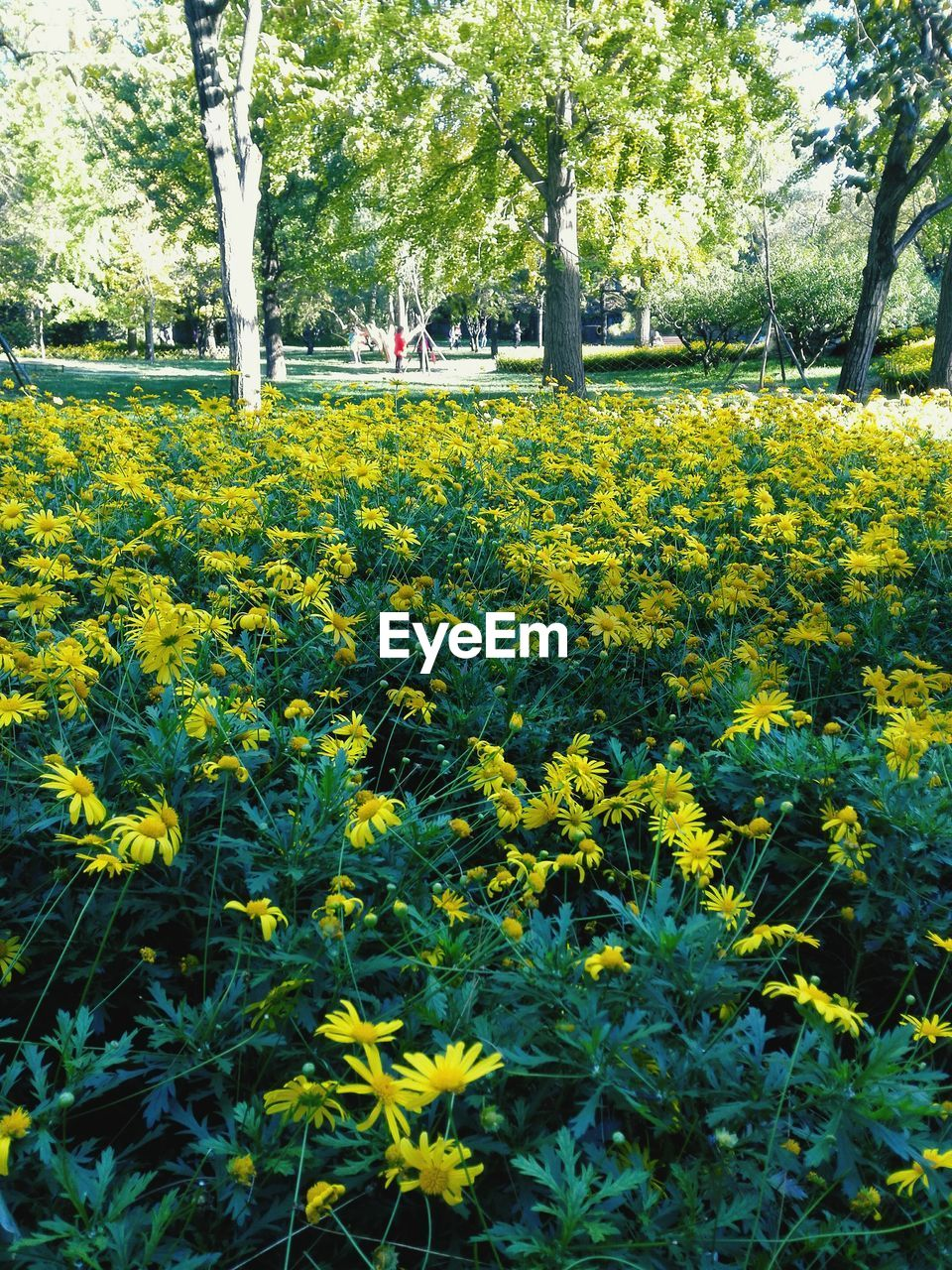 flower, nature, growth, beauty in nature, yellow, tree, outdoors, tranquility, plant, day, field, fragility, park - man made space, blooming, freshness, scenics, no people