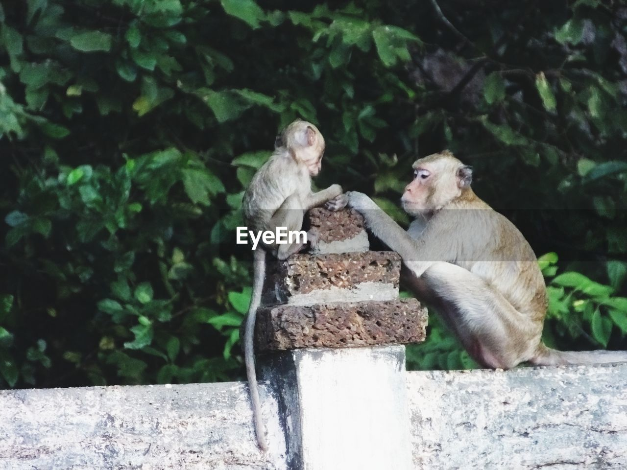 mammal, primate, animals in the wild, animal wildlife, vertebrate, group of animals, sitting, day, two animals, tree, people, plant, nature, wall, focus on foreground, outdoors, care, animal family