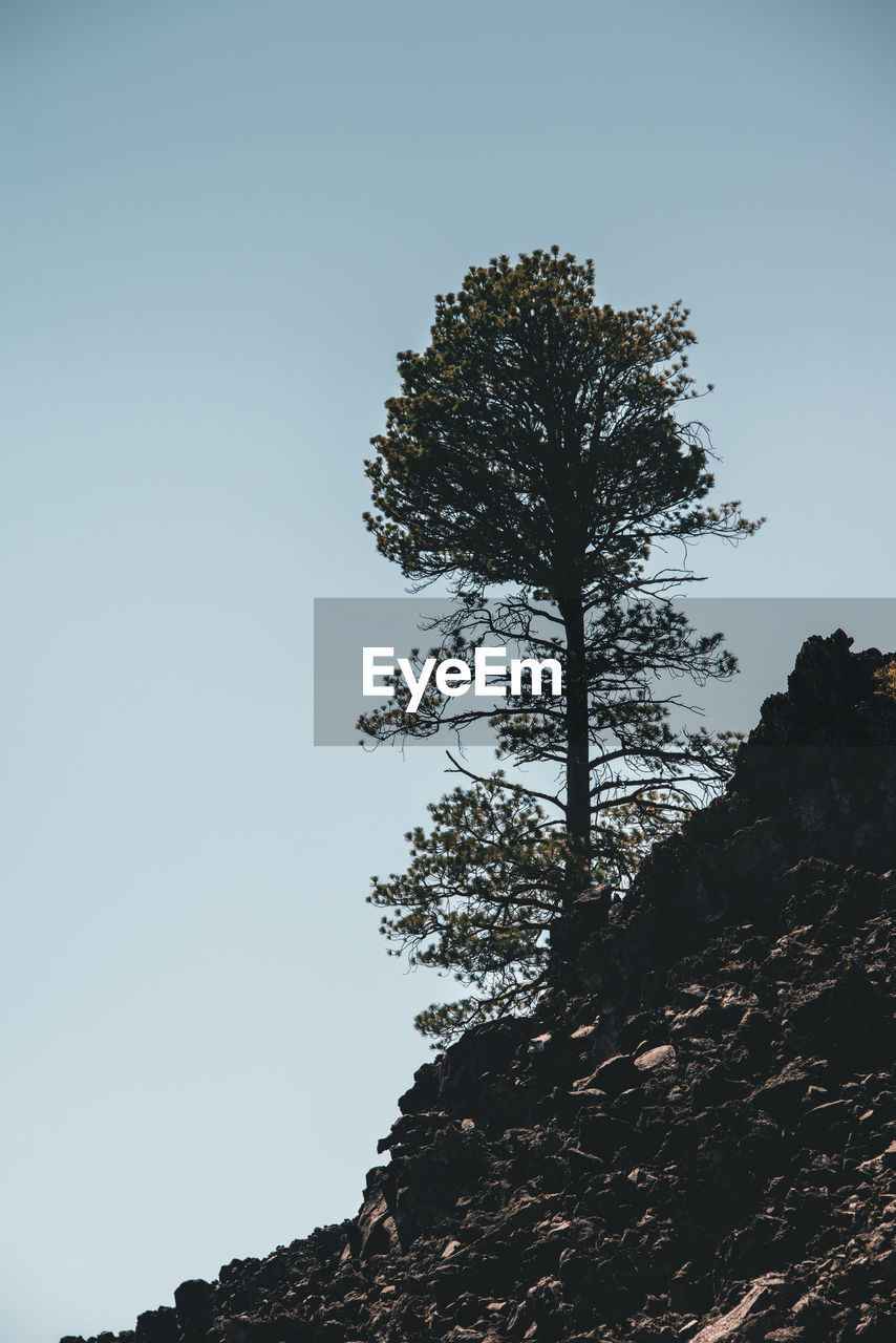 sky, plant, tree, low angle view, clear sky, tranquility, growth, beauty in nature, rock, nature, no people, scenics - nature, rock - object, day, tranquil scene, copy space, solid, outdoors, non-urban scene, mountain, mountain peak
