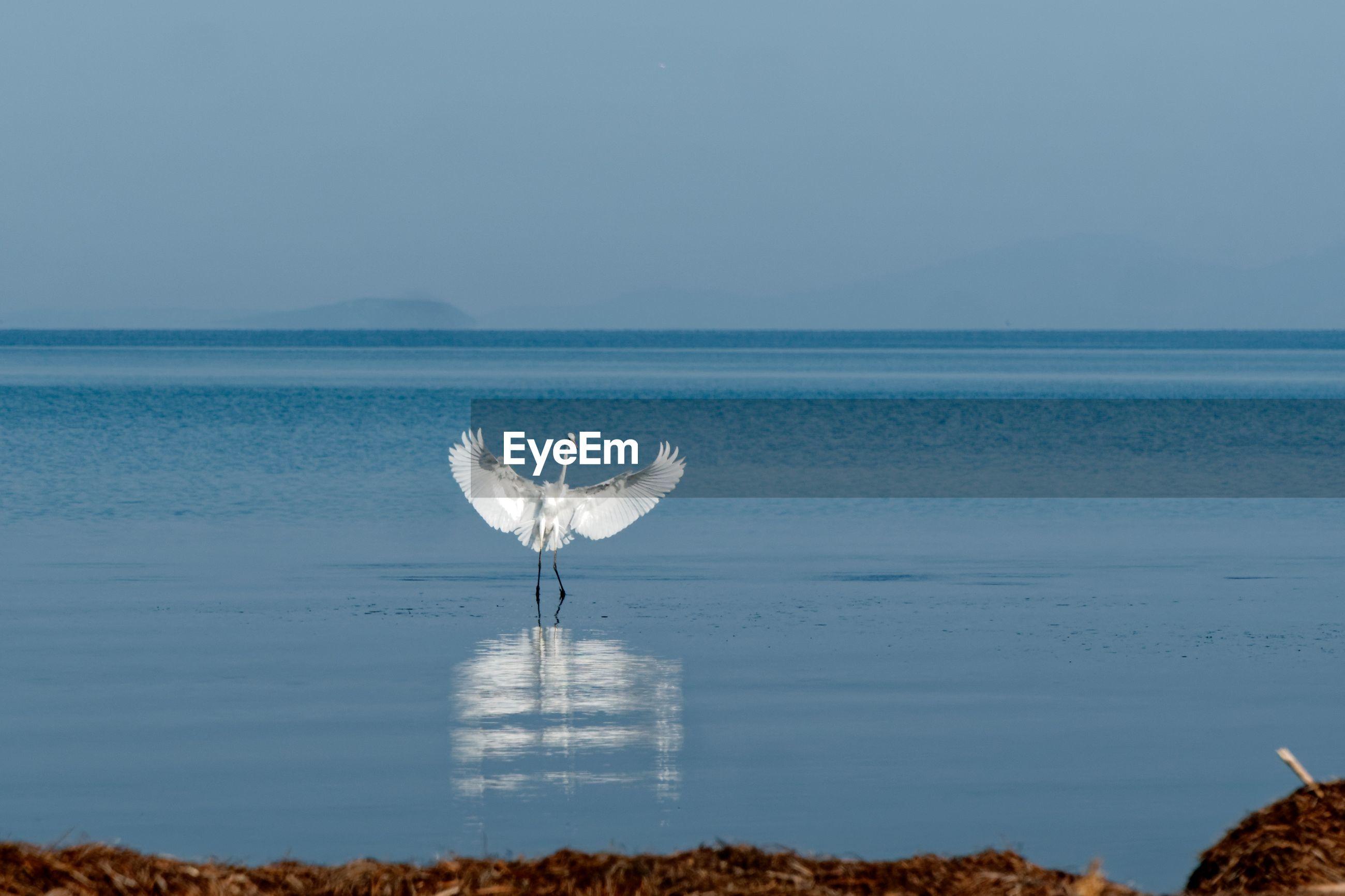 BIRD ON SHORE AGAINST SEA