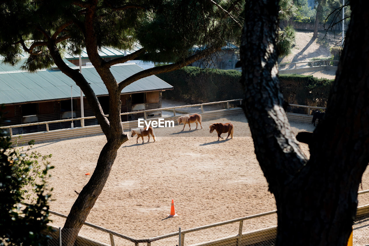 High Angle View Of Pony Horses At Stable Seen Through Trees