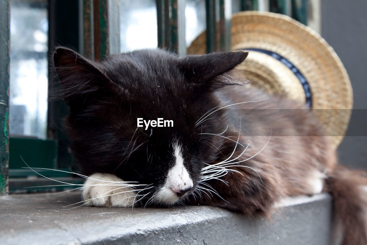 Close-Up Of Cat Sleeping On Window Sill