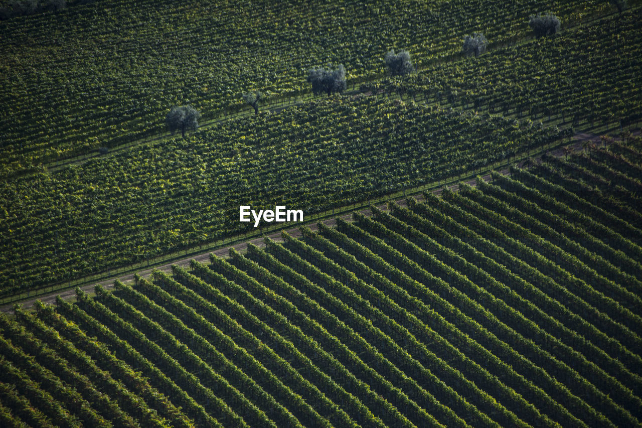 agriculture, rural scene, field, farm, land, landscape, plant, crop, nature, environment, tranquil scene, growth, in a row, pattern, scenics - nature, tranquility, green color, harvesting, no people, aerial view, outdoors