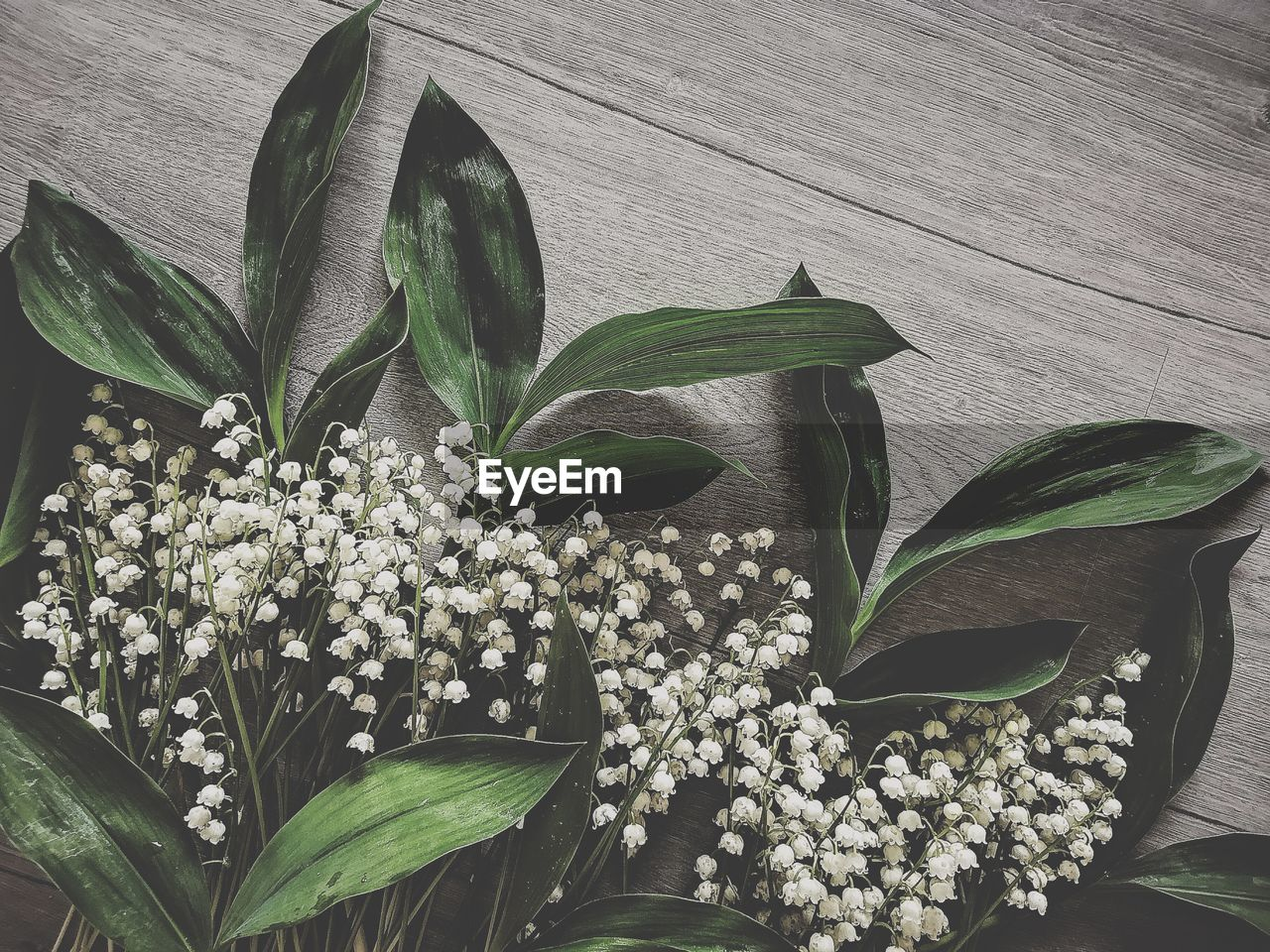 leaf, plant part, plant, flower, flowering plant, beauty in nature, growth, nature, freshness, green color, no people, fragility, vulnerability, close-up, indoors, flower head, white color, potted plant, wood - material, flower arrangement, bouquet