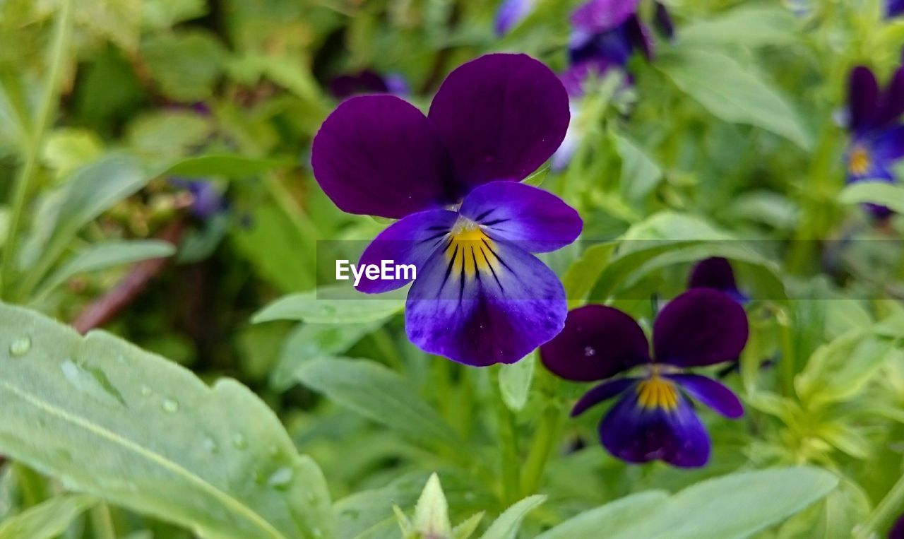 flower, growth, petal, purple, fragility, plant, beauty in nature, freshness, nature, blooming, day, flower head, close-up, no people, park - man made space, green color, outdoors, leaf