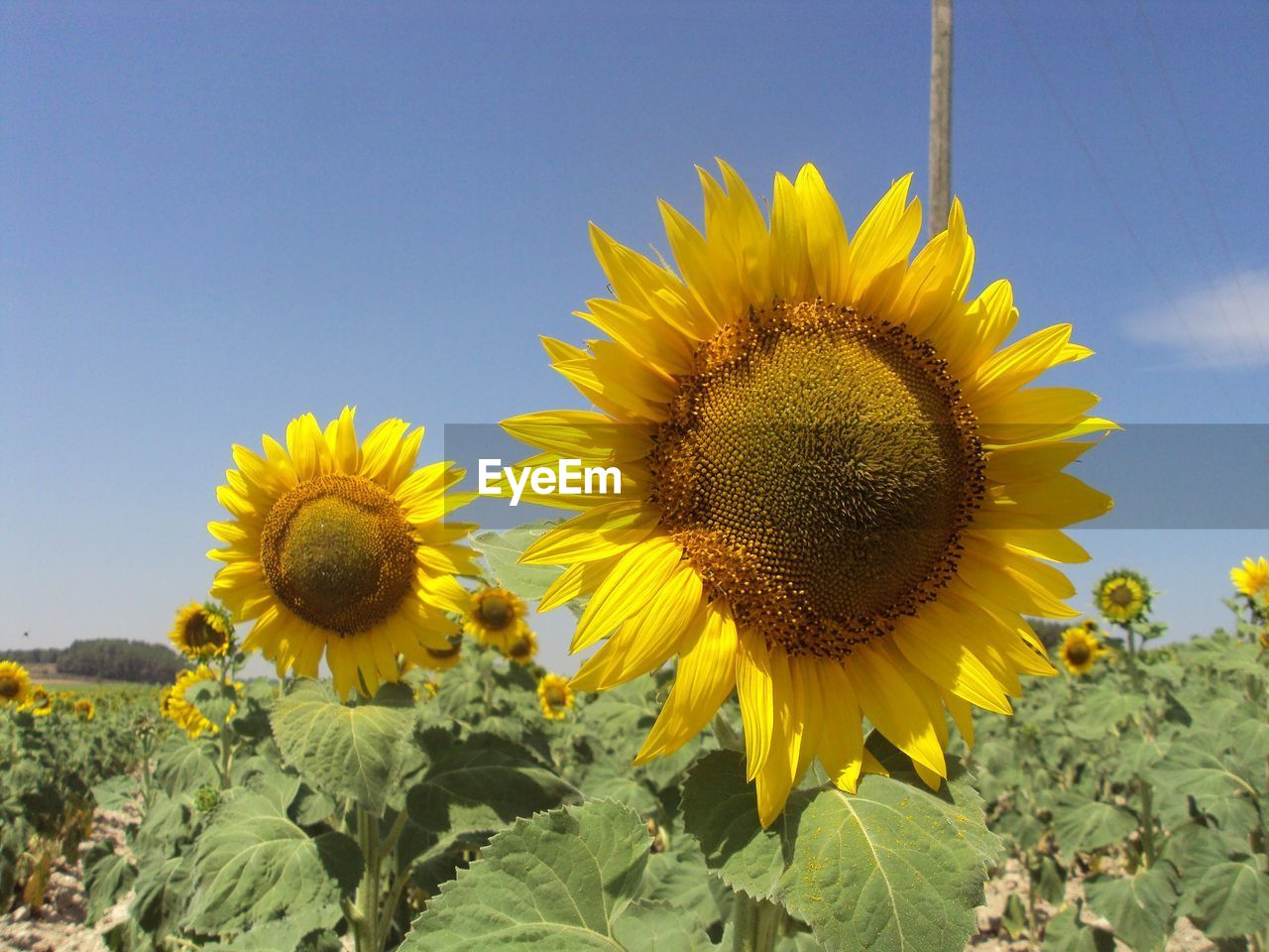 yellow, plant, flower, flowering plant, growth, flower head, beauty in nature, freshness, fragility, sunflower, vulnerability, petal, inflorescence, nature, sky, close-up, pollen, no people, day, focus on foreground, outdoors