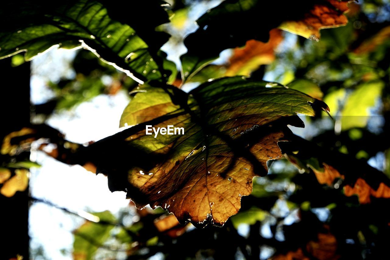 leaf, nature, focus on foreground, day, growth, outdoors, close-up, beauty in nature, no people, tree, fragility, freshness