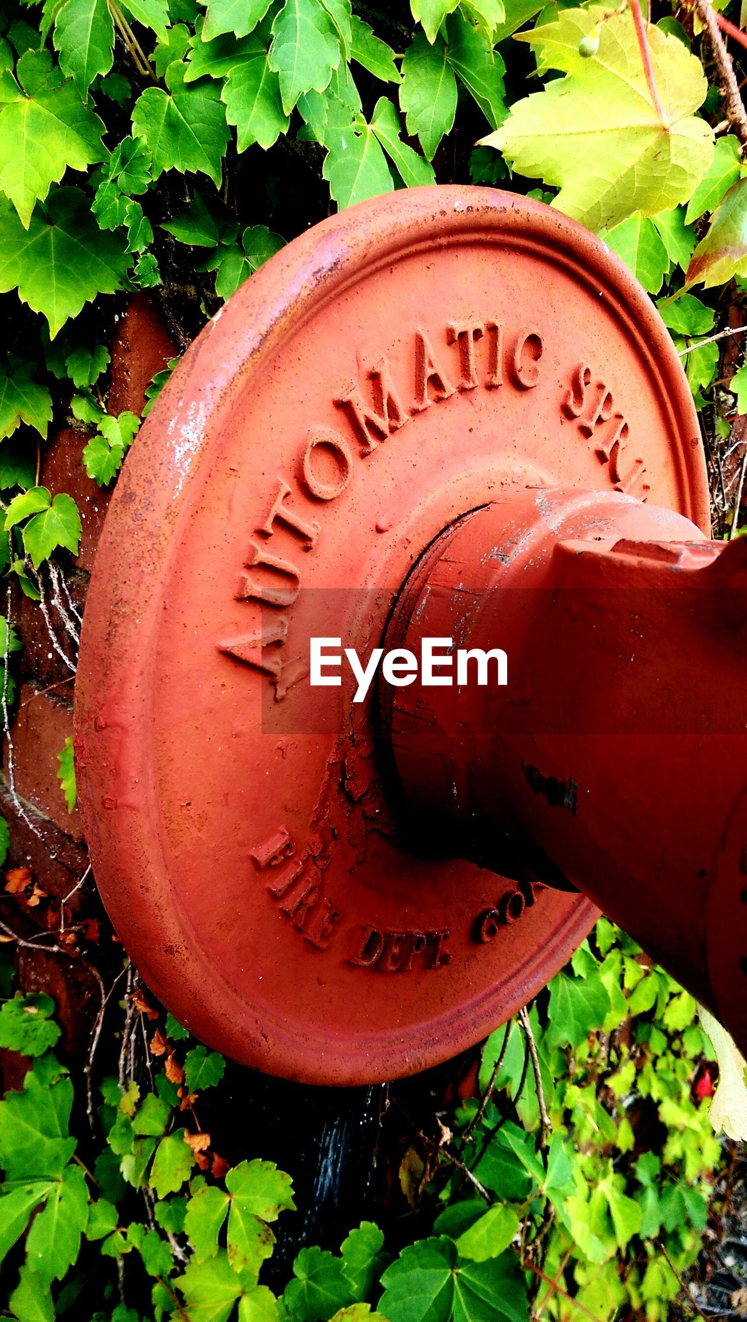 text, communication, leaf, close-up, western script, plant, growth, green color, red, old, rusty, metal, high angle view, circle, no people, outdoors, day, art, non-western script, number