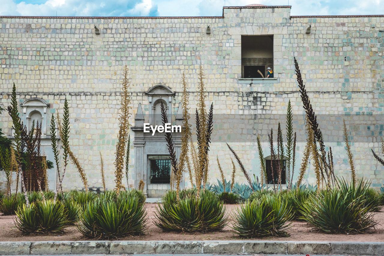 Plants Against Church Of Santo Domingo De Guzman