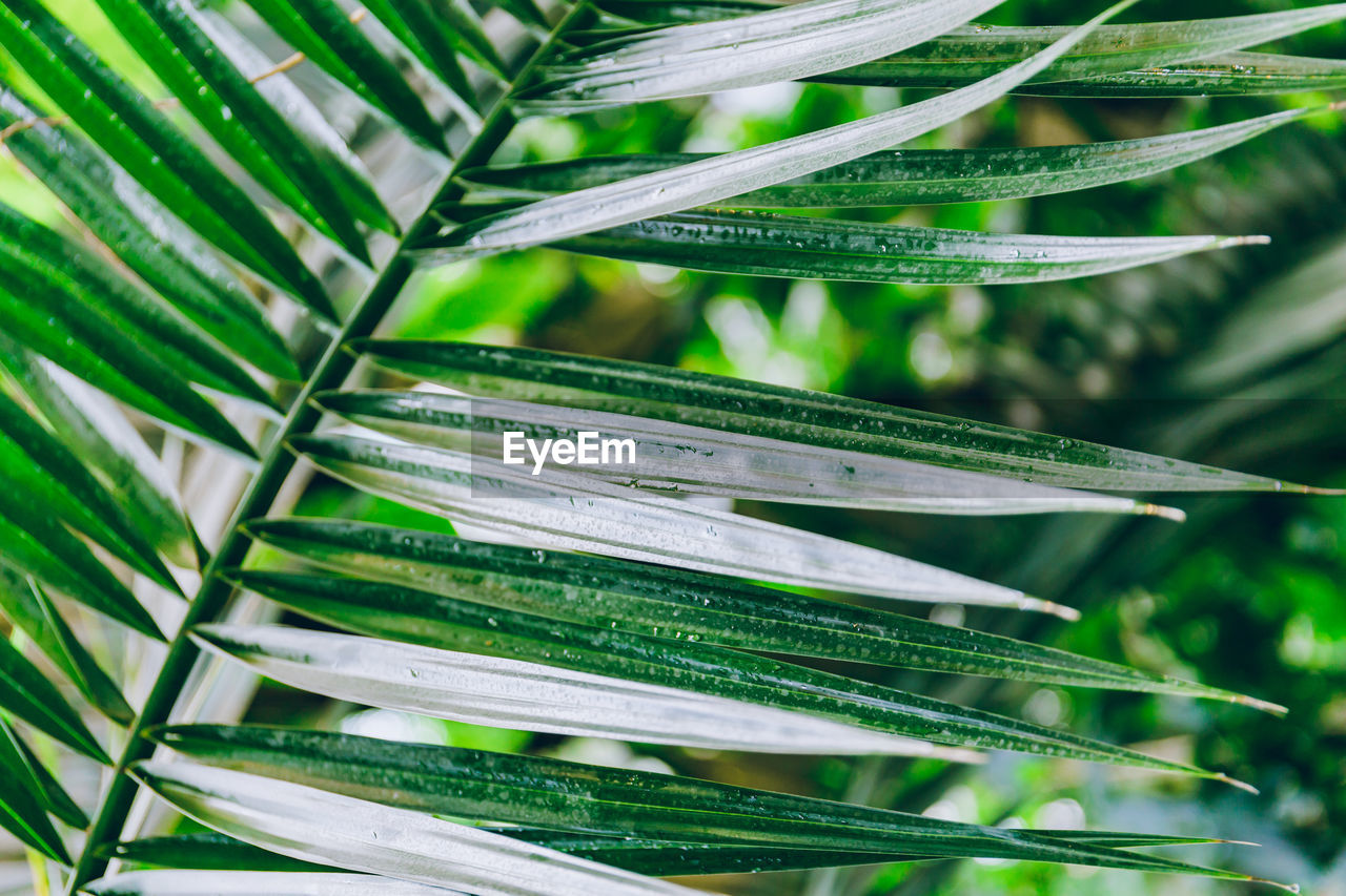 plant, growth, green color, leaf, plant part, nature, no people, beauty in nature, focus on foreground, close-up, day, natural pattern, outdoors, full frame, tree, pattern, sunlight, backgrounds, tranquility, freshness, palm leaf, leaves, blade of grass